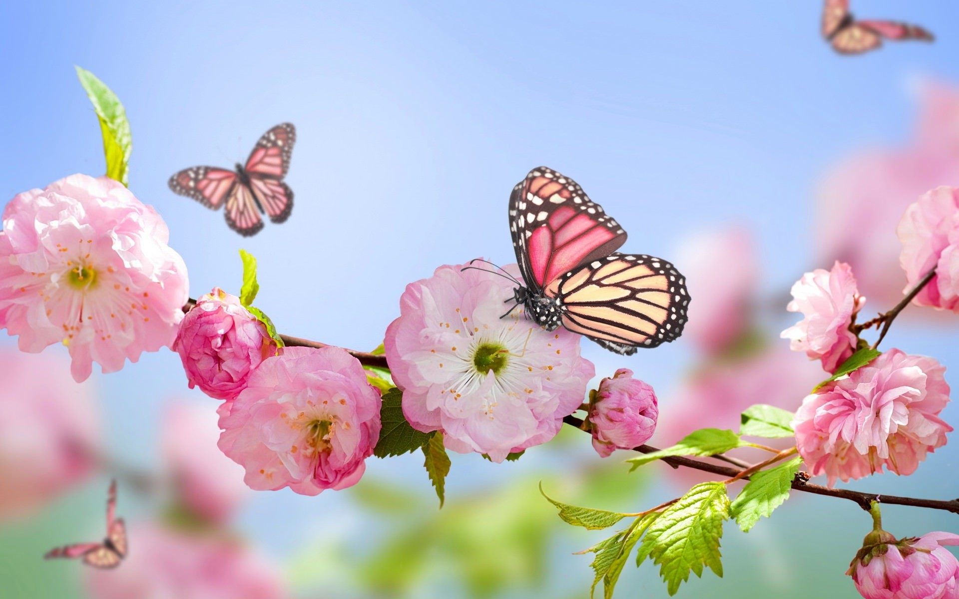 Spring flowers wallpapers 82 background pictures 1920x1200 spring flowers wallpaper mightylinksfo