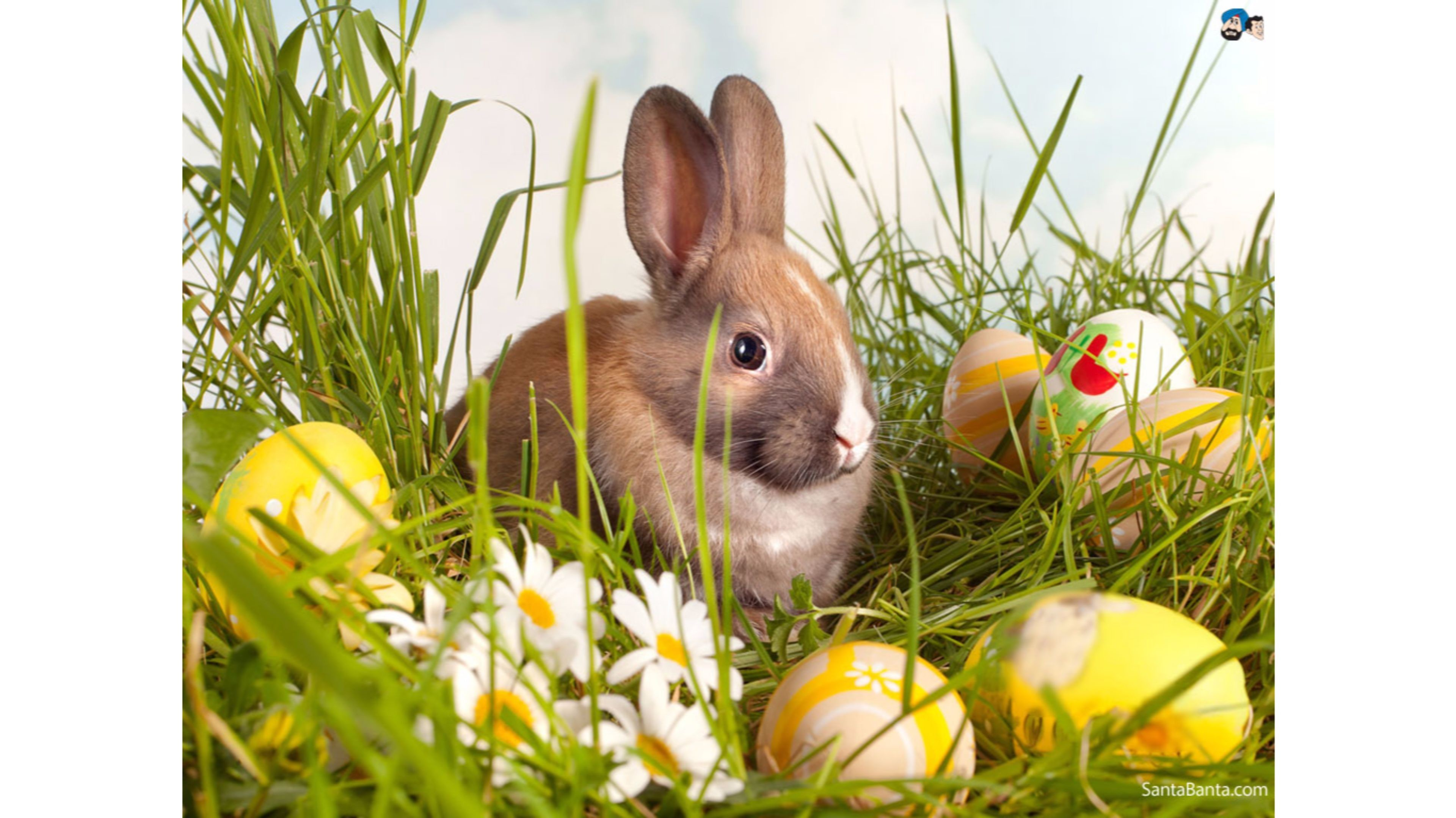 Bunny wallpapers 75 background pictures - Easter bunny wallpaper ...