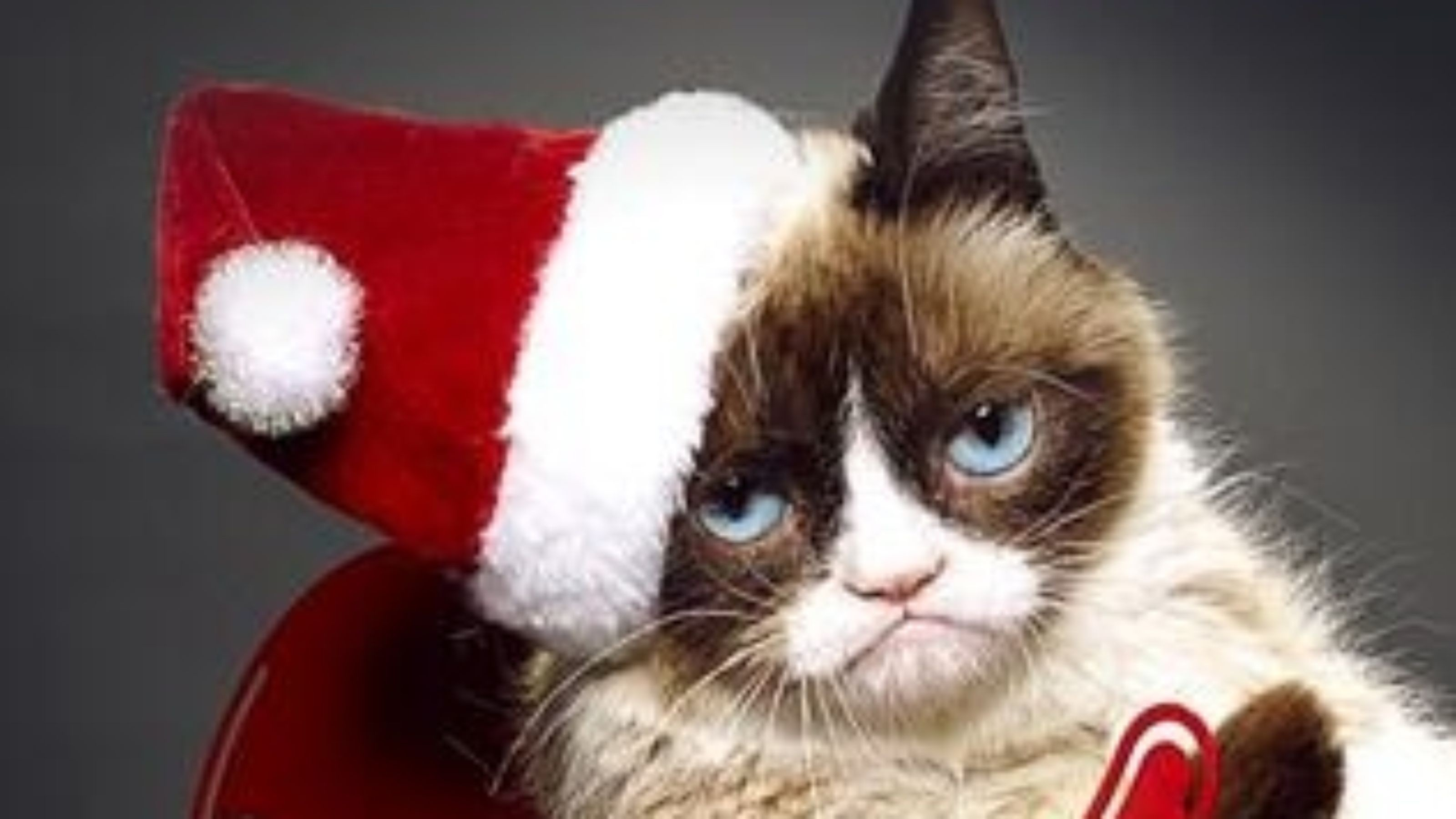 Grumpy Cat Wallpapers 58 Background Pictures
