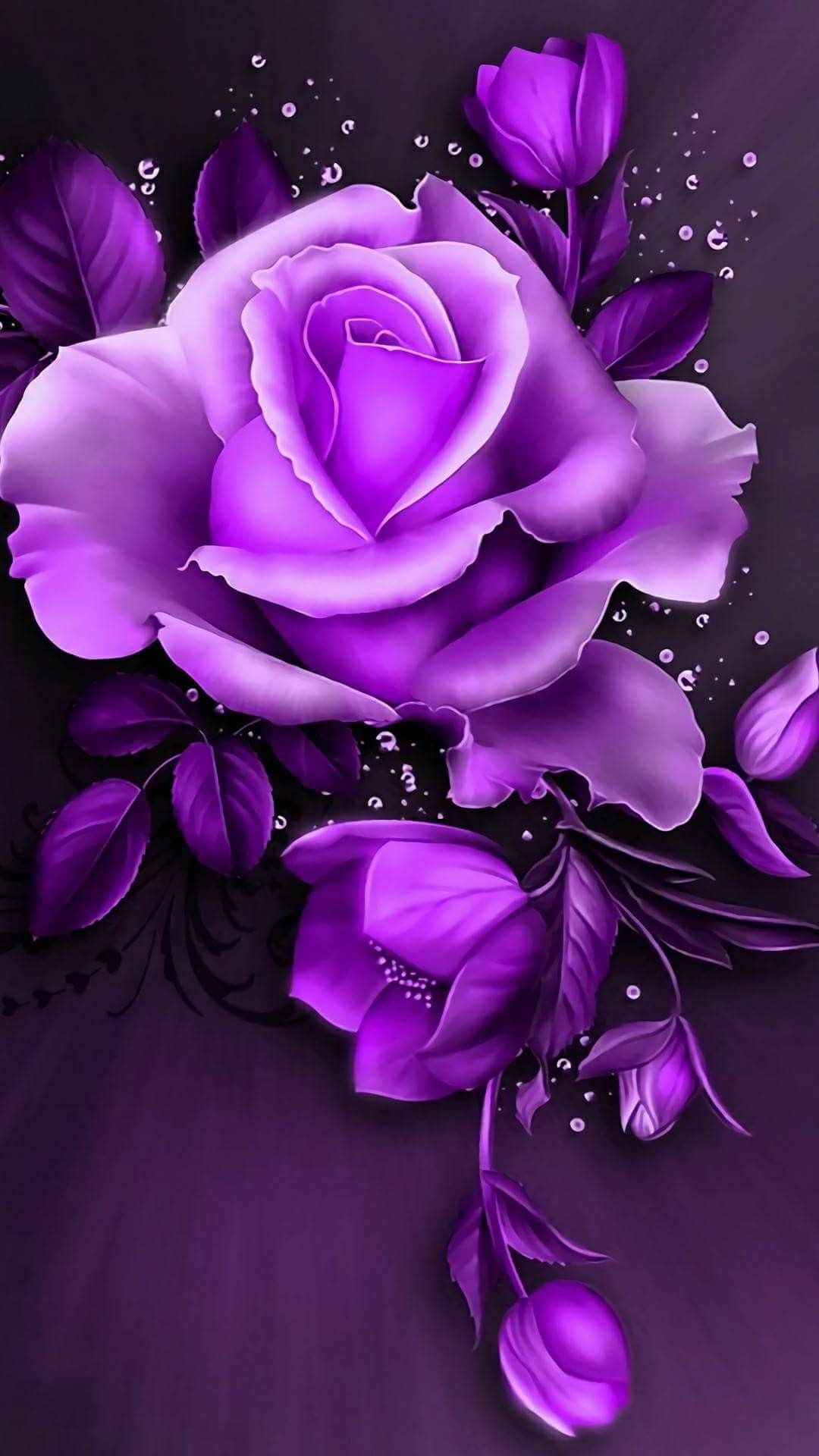 Purple Roses Wallpapers 66 Background Pictures