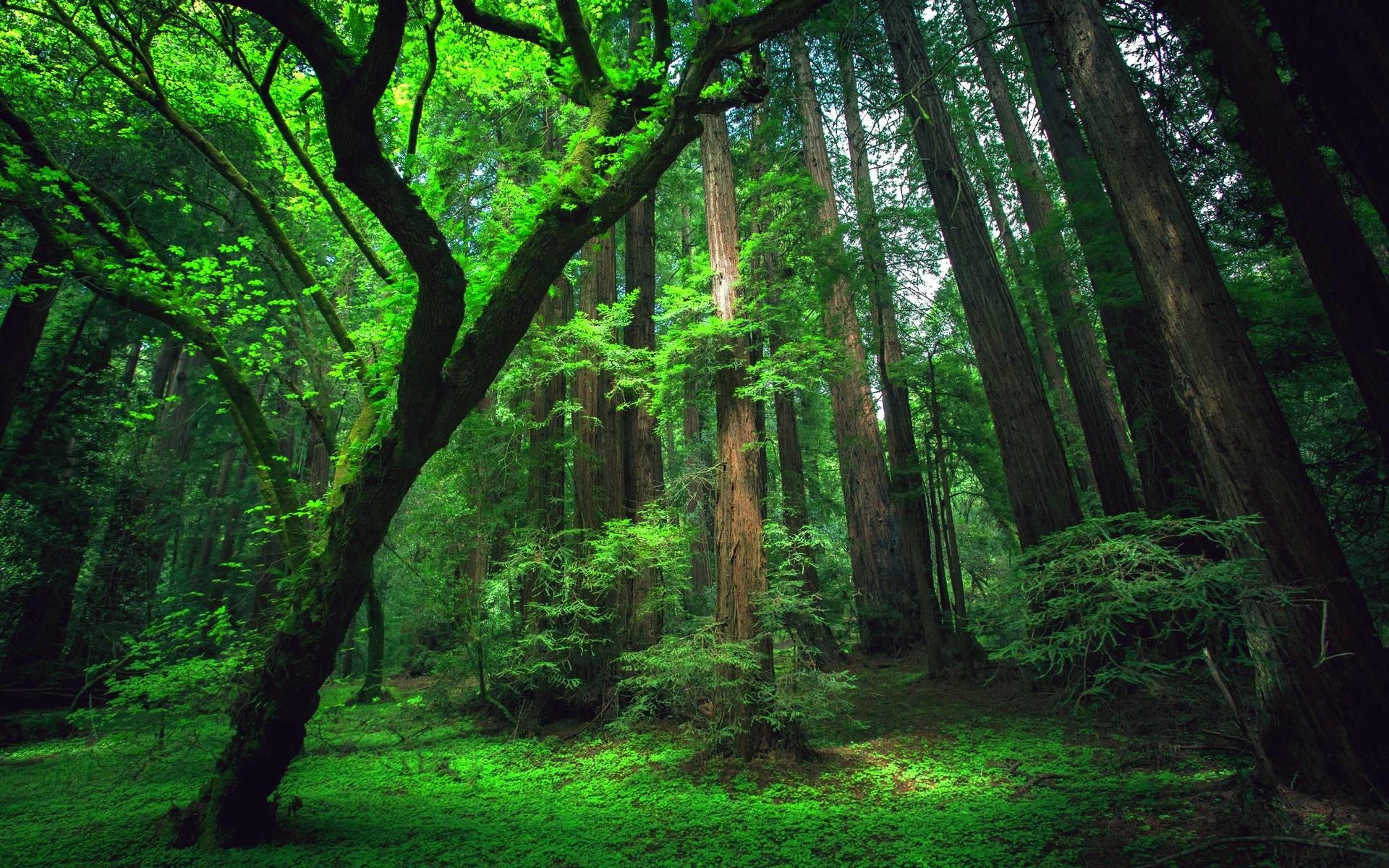 Amazon Rainforest Wallpapers 58 Background Pictures