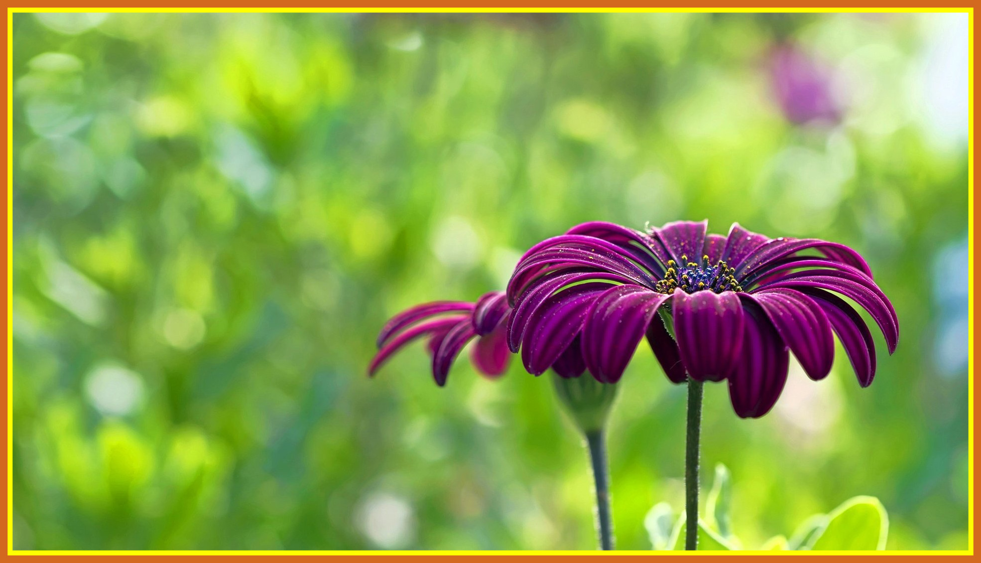 Full Hd Flowers Wallpapers 75 Background Pictures