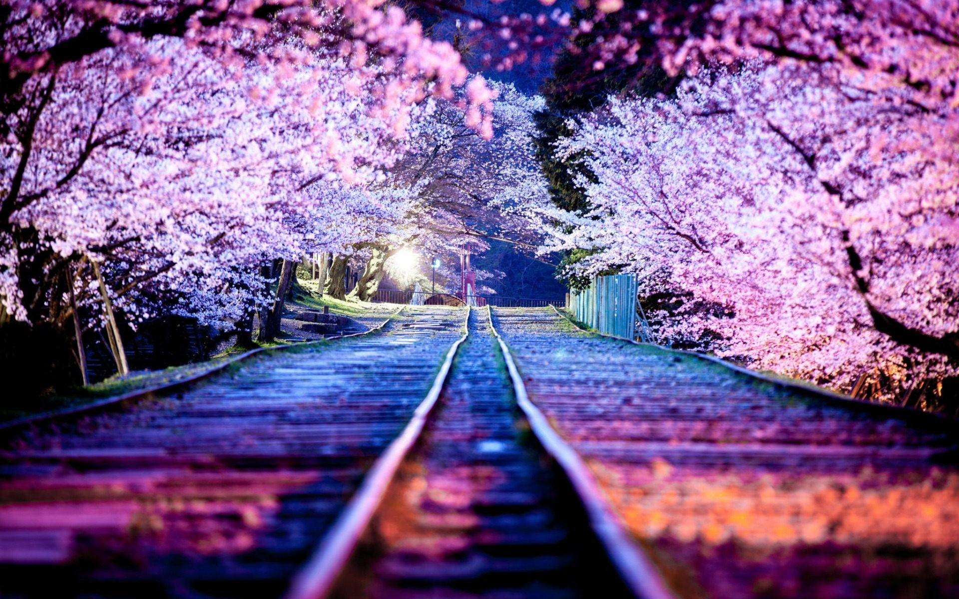 Sakura Wallpapers 68 Background Pictures