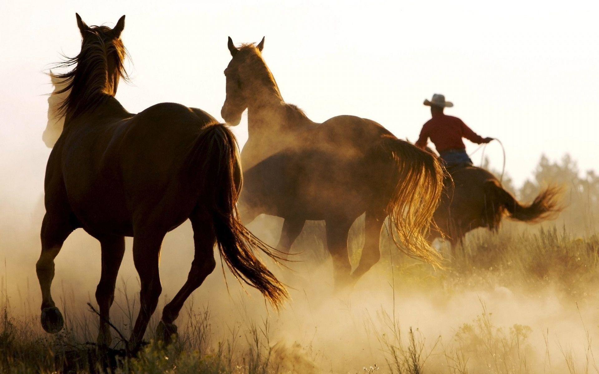 1920x1200 1920x1200 Wild Horses and Cowboy desktop PC and Mac wallpaper