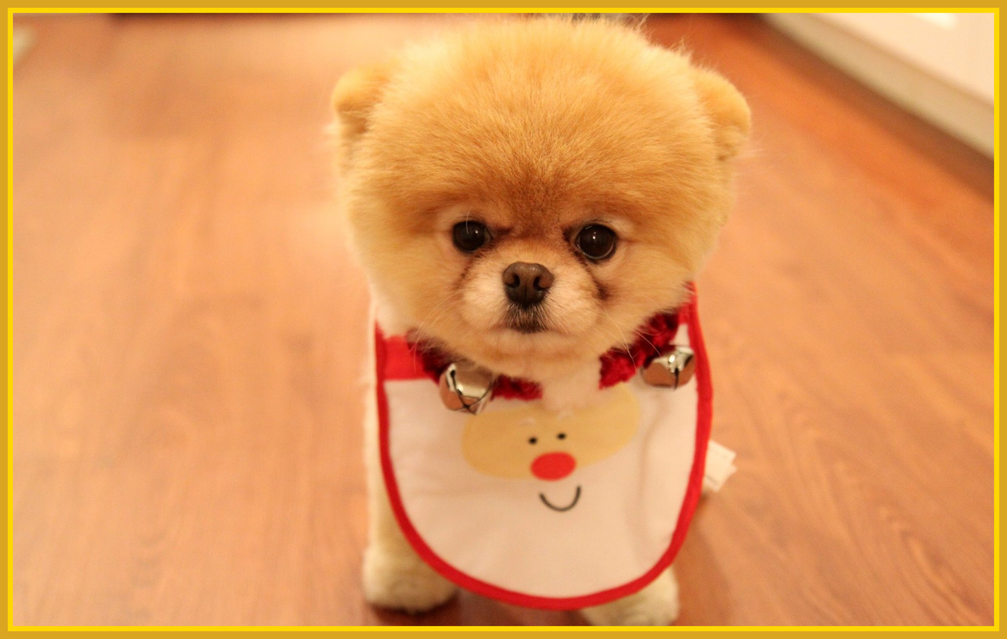 Puppy Christmas Wallpapers (72+ background pictures)