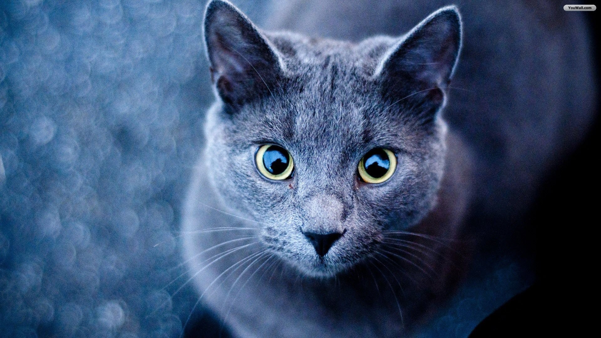 Cute Cats Wallpapers 76 Background Pictures
