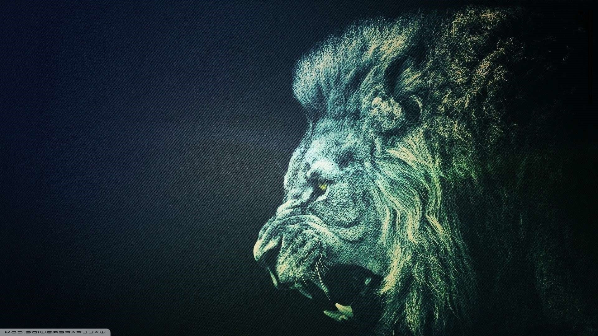 1920x1080 Lion Wallpapers Widescreen