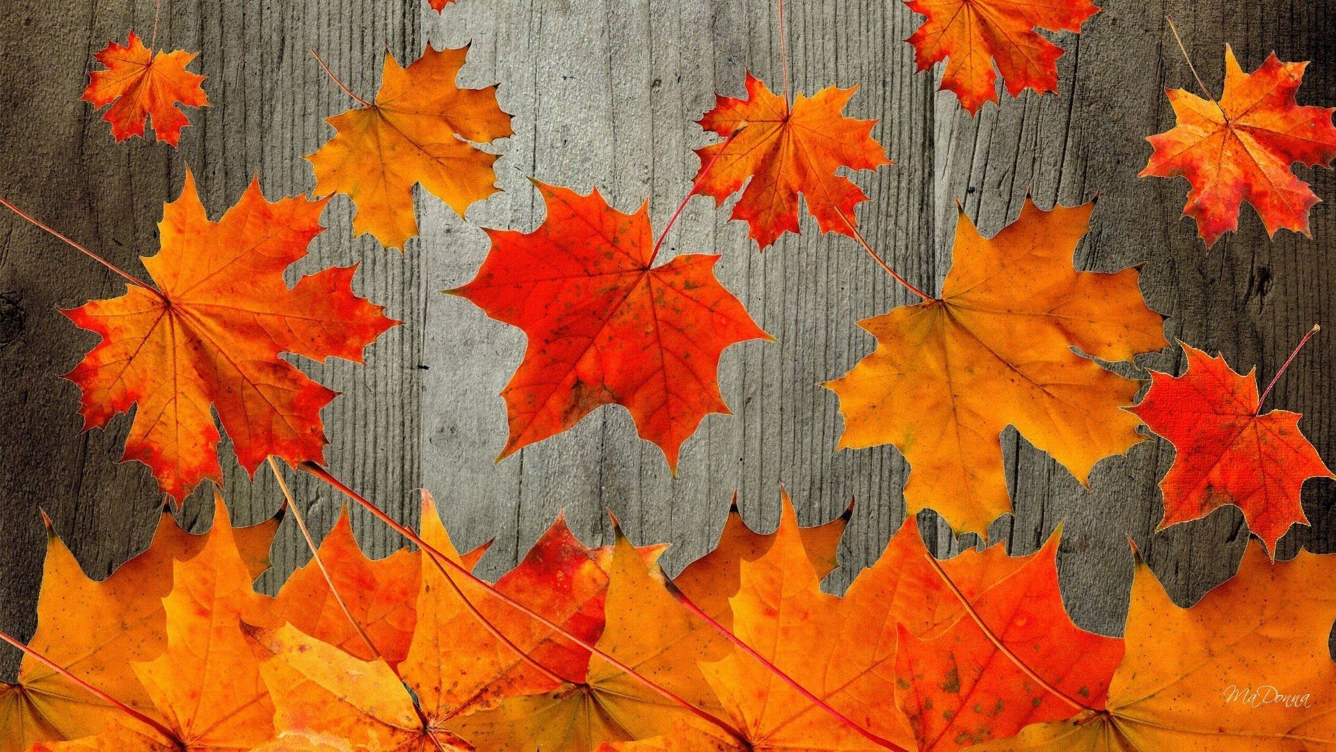 Peachy Autumn Wallpapers For Desktop 65 Background Pictures Home Interior And Landscaping Ologienasavecom