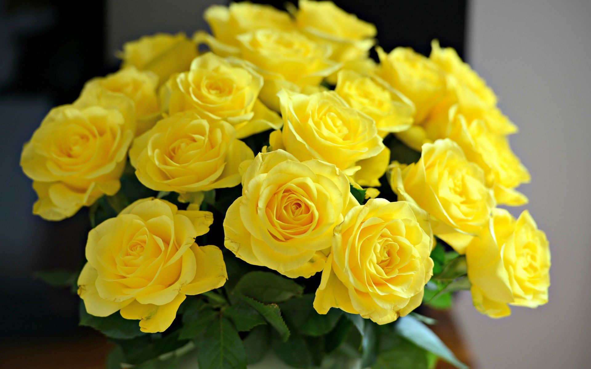Yellow Rose Wallpapers 67 Background Pictures