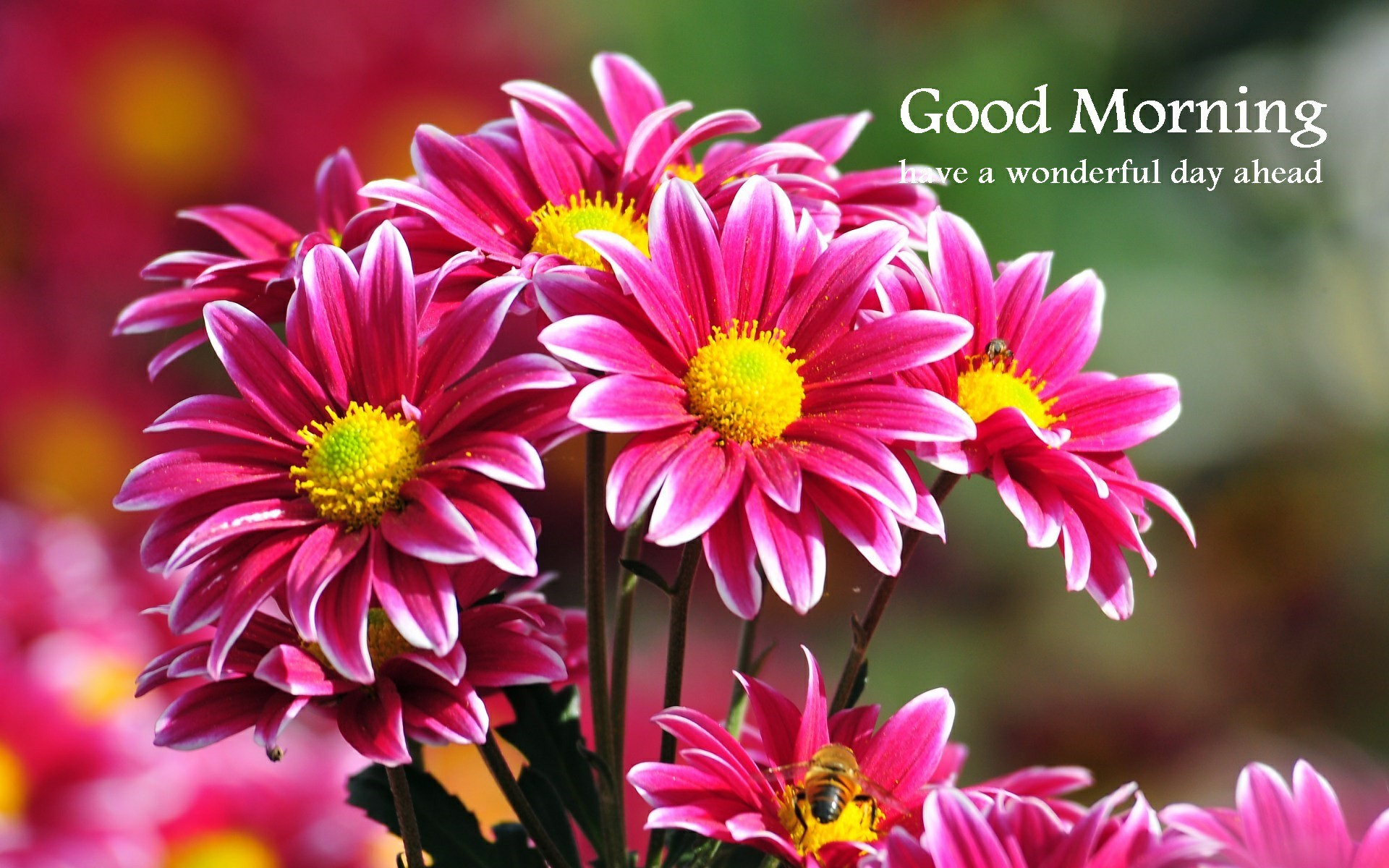 Good Morning Wallpapers (65+ background pictures)