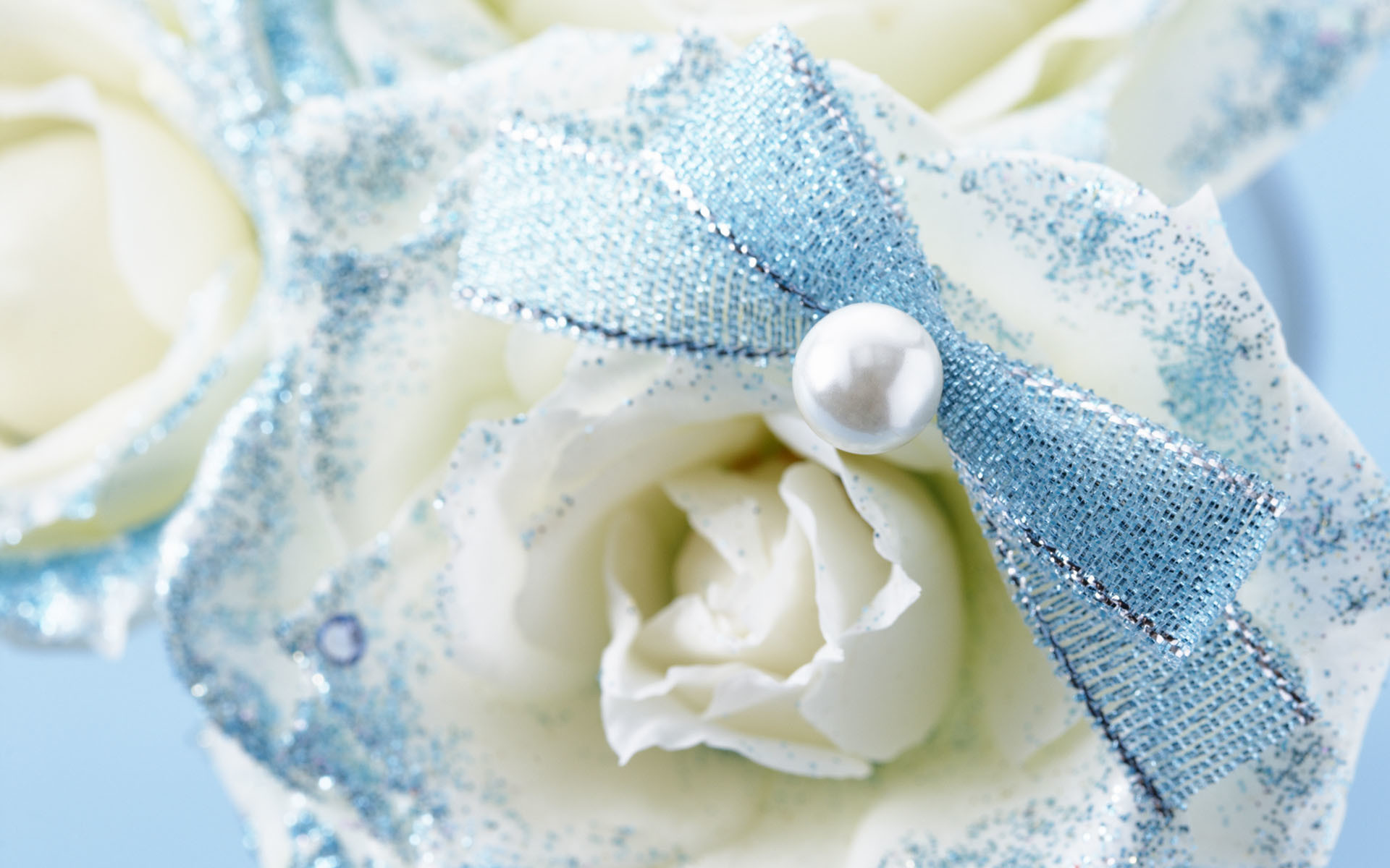 White Roses Wallpapers 60 Background Pictures