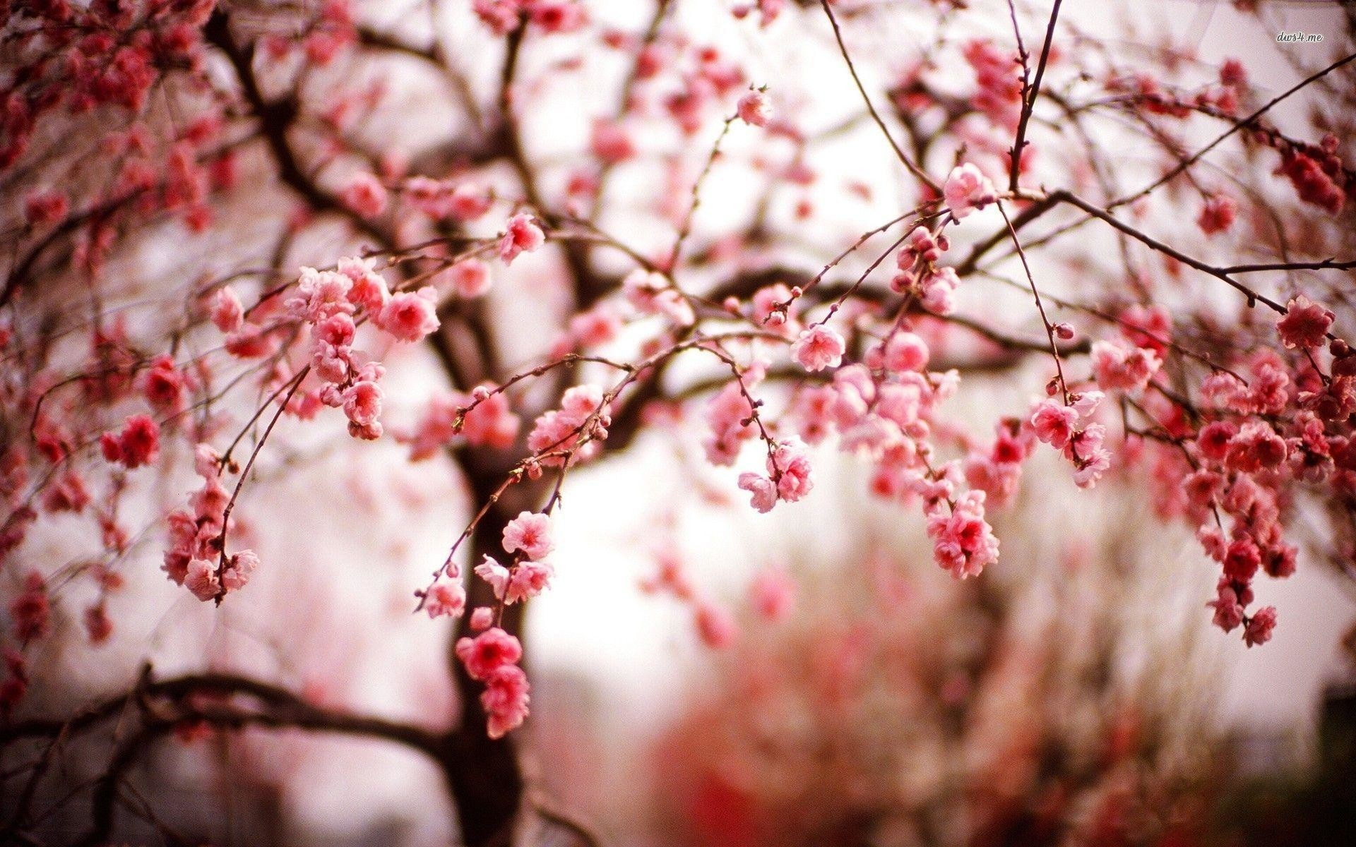 Download x Wallpaper Flowers Cherry Blossom Pink Water