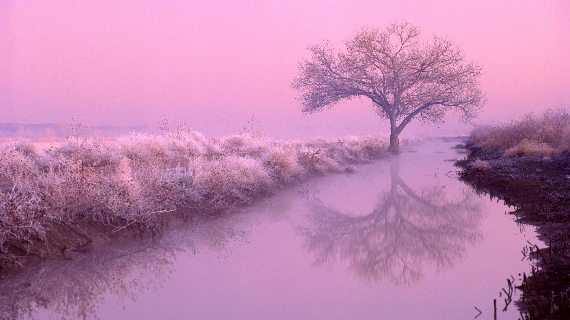 Pink Hd Wallpapers 74 Background Pictures