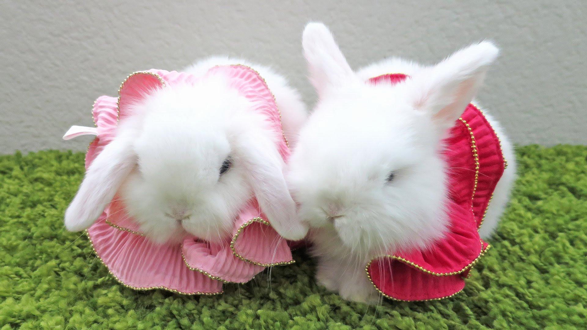 Baby Bunny Wallpapers (69+ background pictures)