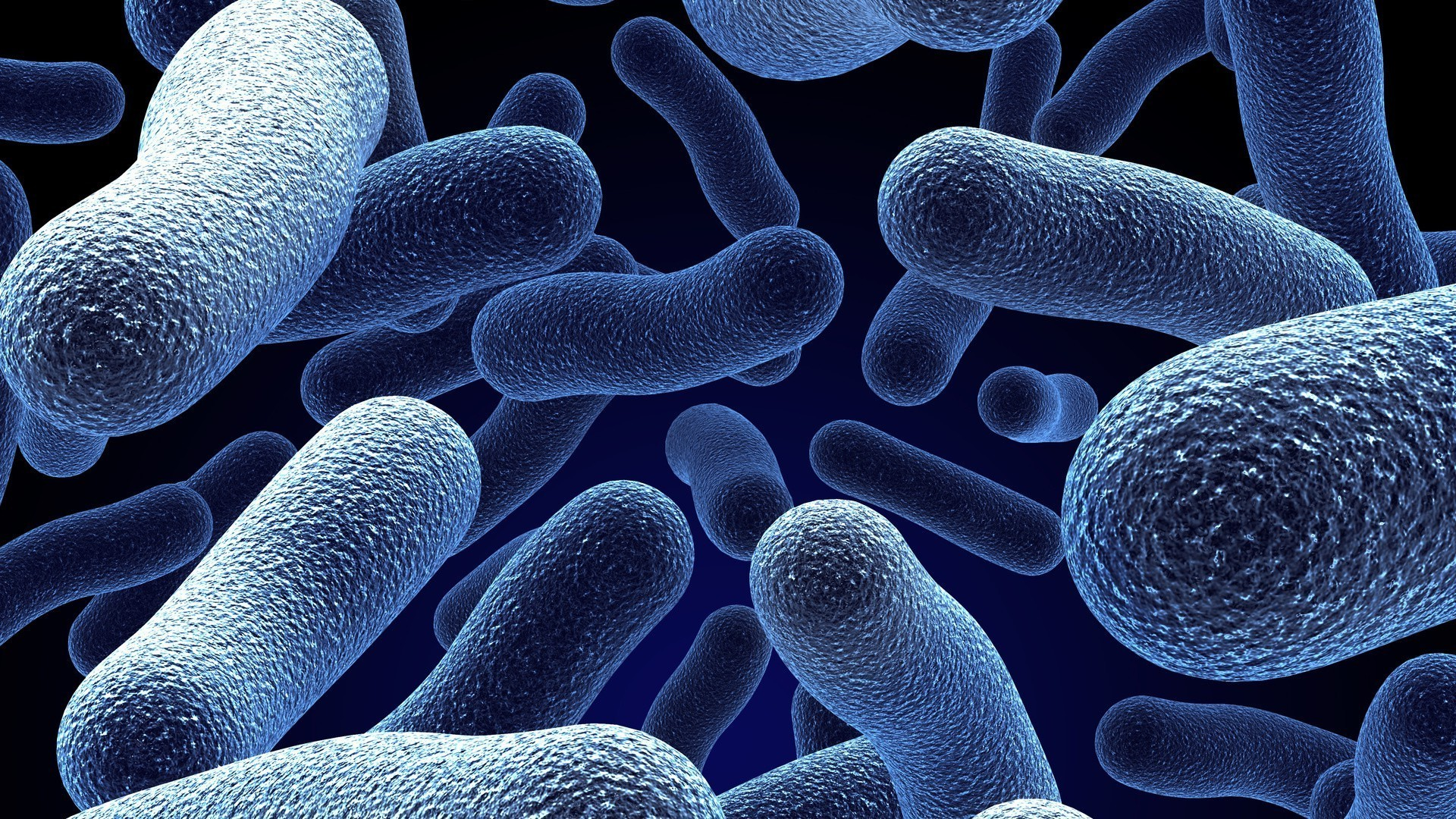 Image result for bacteria HD