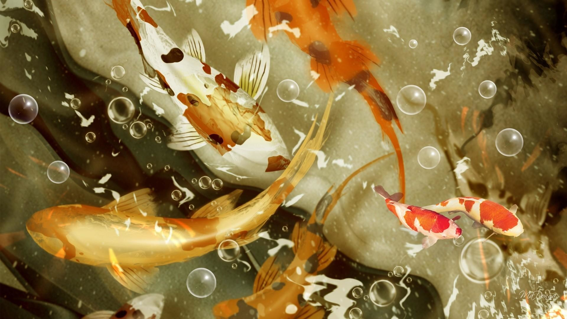 Koi Fish Wallpapers (63+ background pictures)