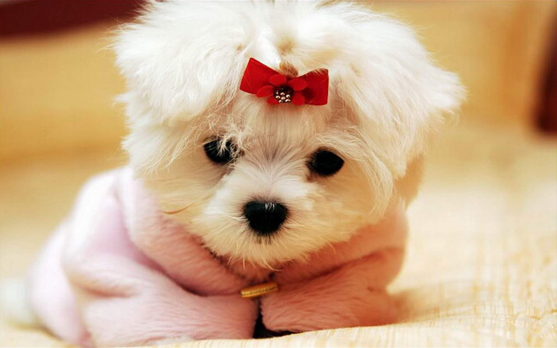 puppies cute wallpapers 74 background pictures