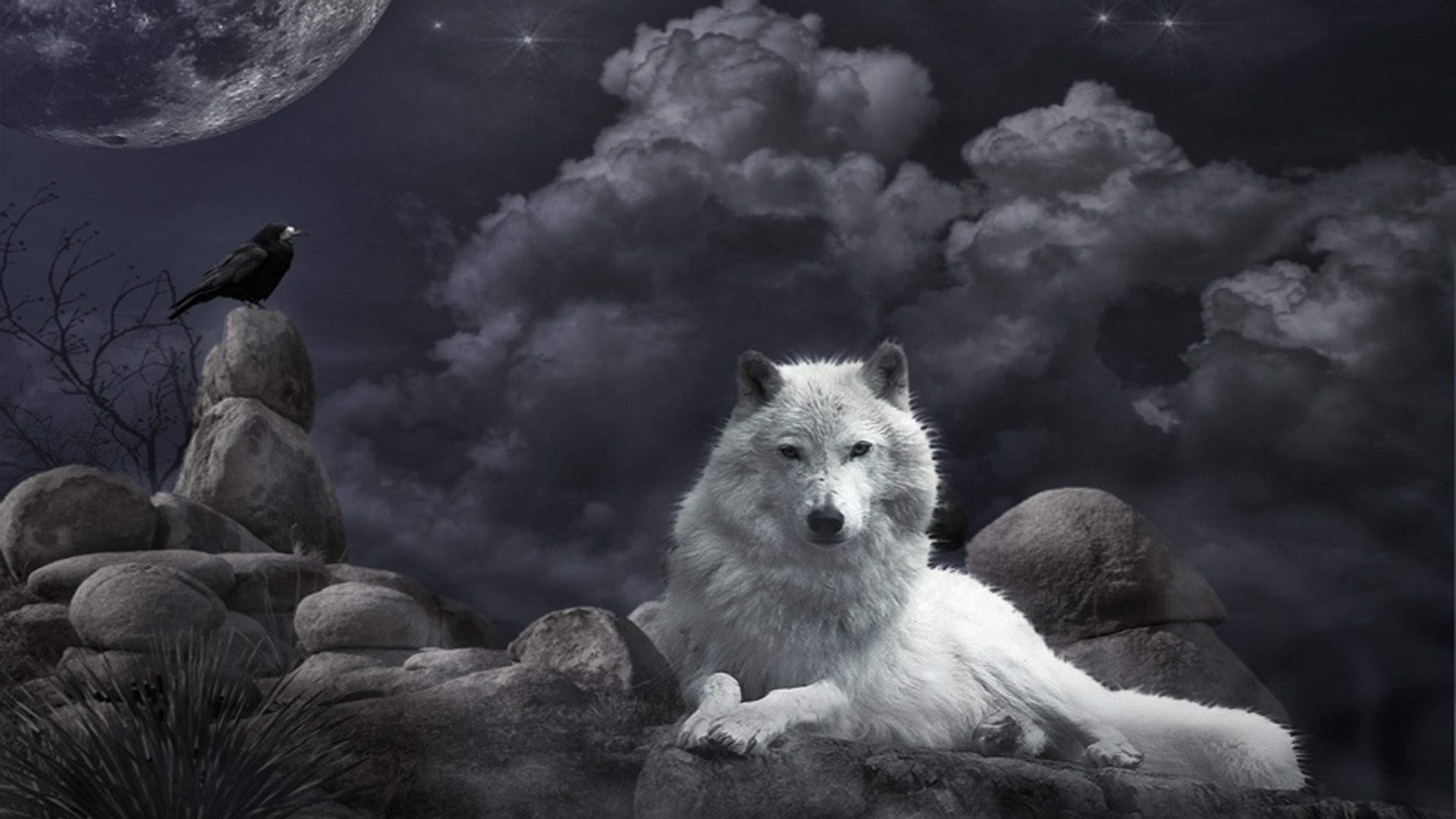 1920x1200 Background: High Resolution Cool Wolves Wallpapers, by Shondra Shrout