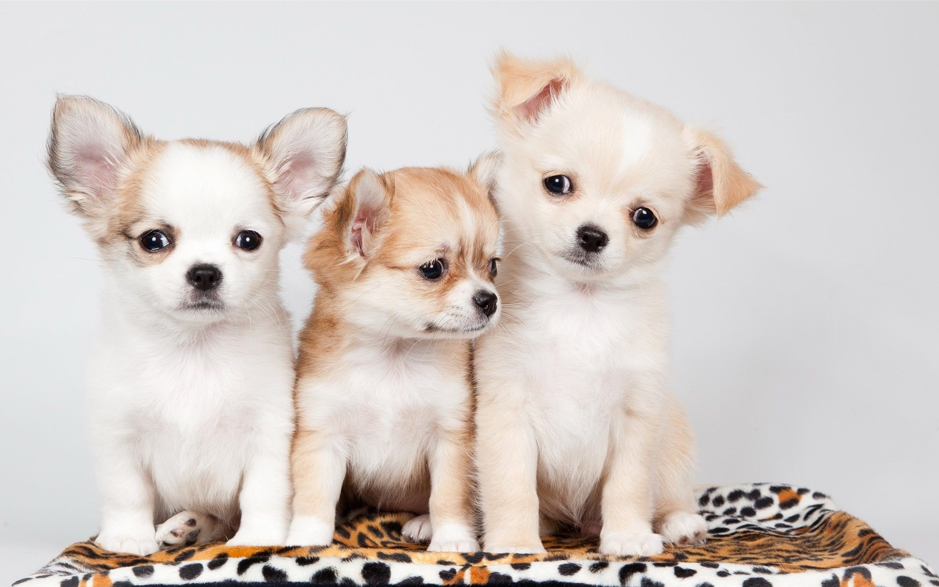 1920x1200 cute puppies wallpapers free download #187247. Resolation: 2560x1600 .