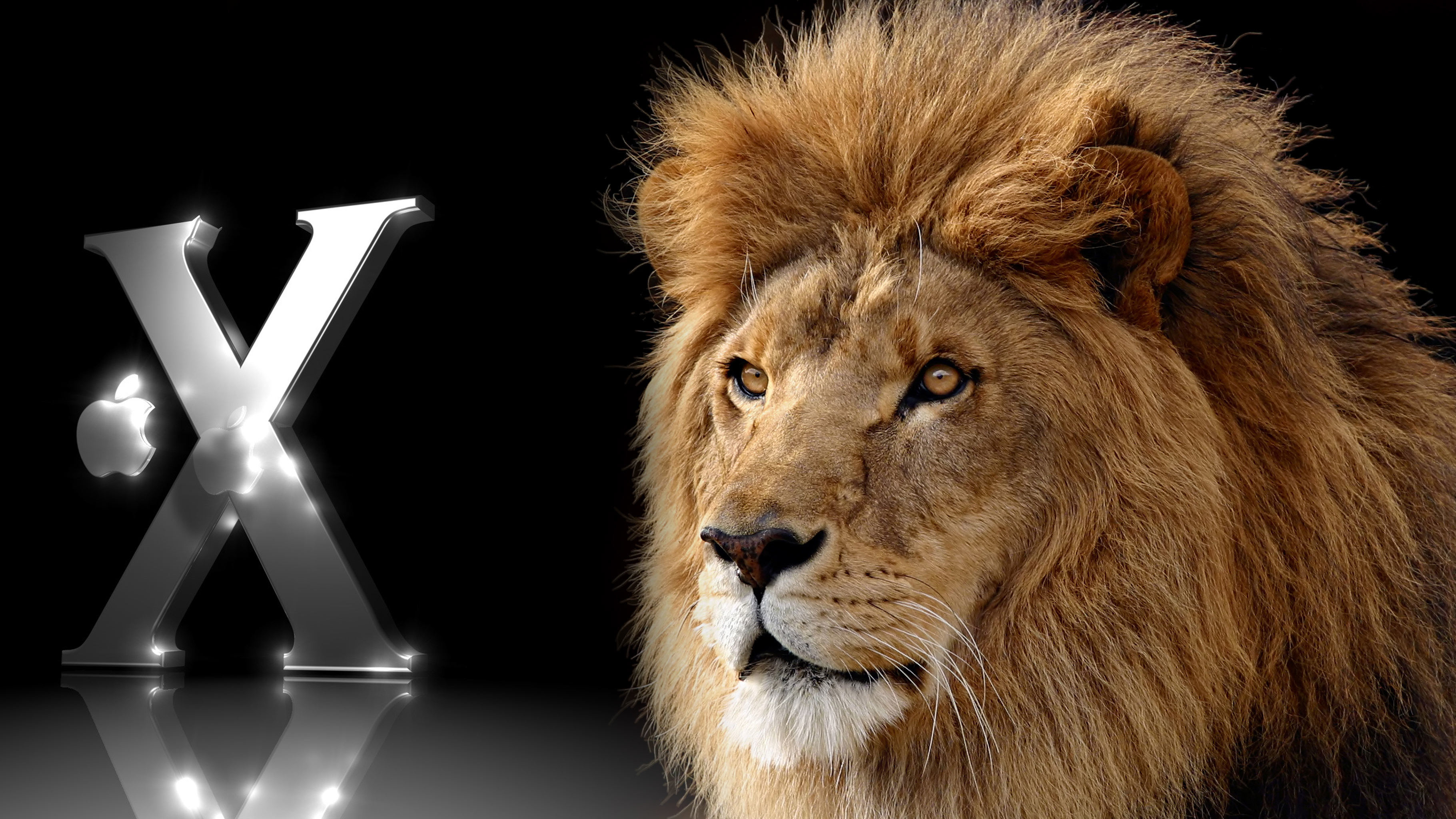 Lion Wallpapers Hd 81 Background Pictures