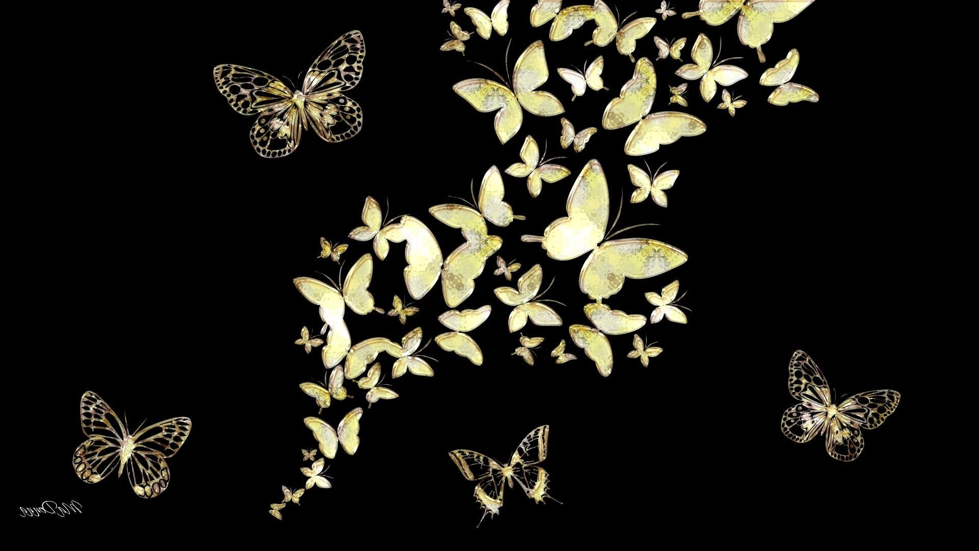 1920x1080 White Butterfly Wallpaper Black And 006