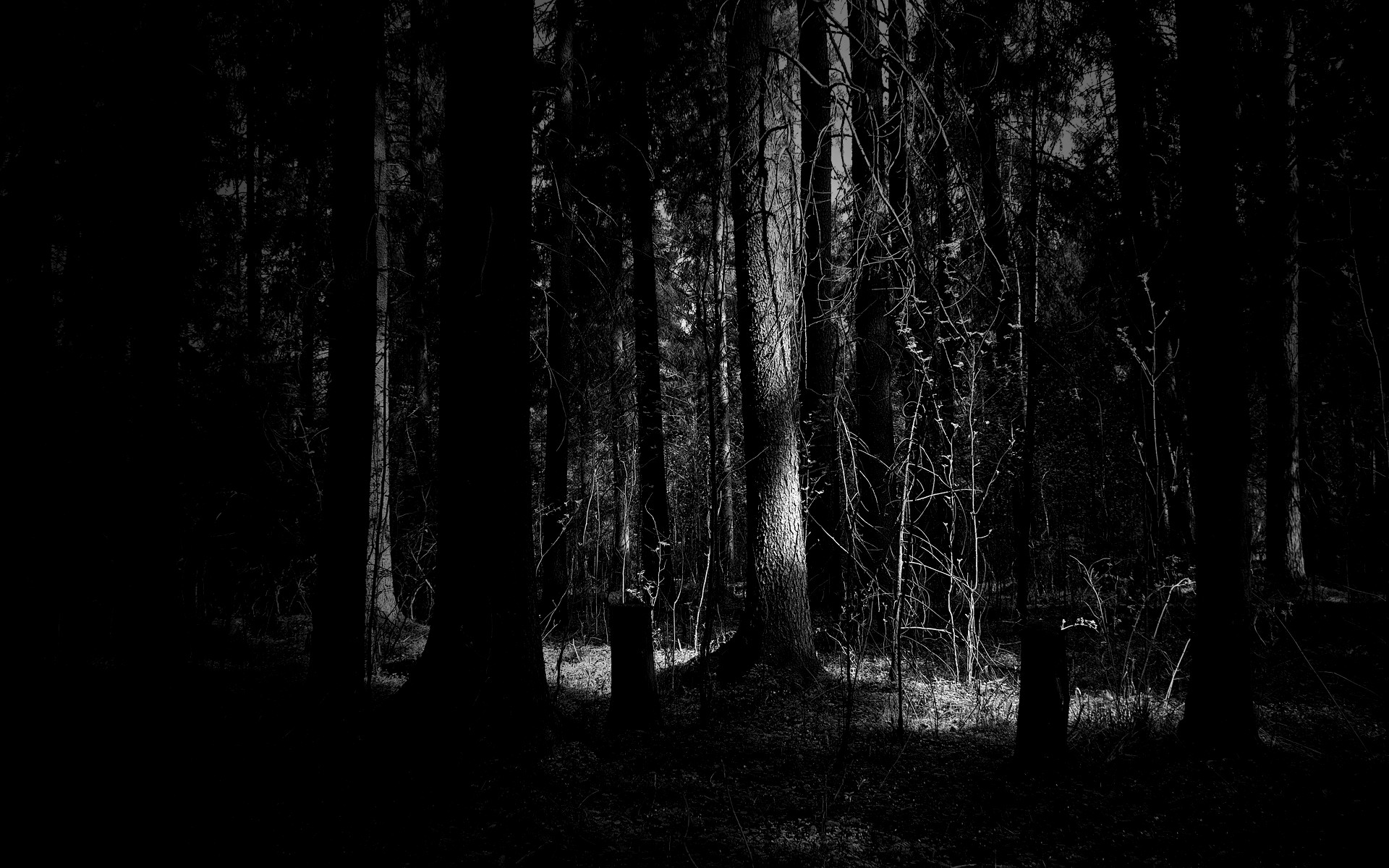 Dark Woods Wallpapers 80 Background Pictures