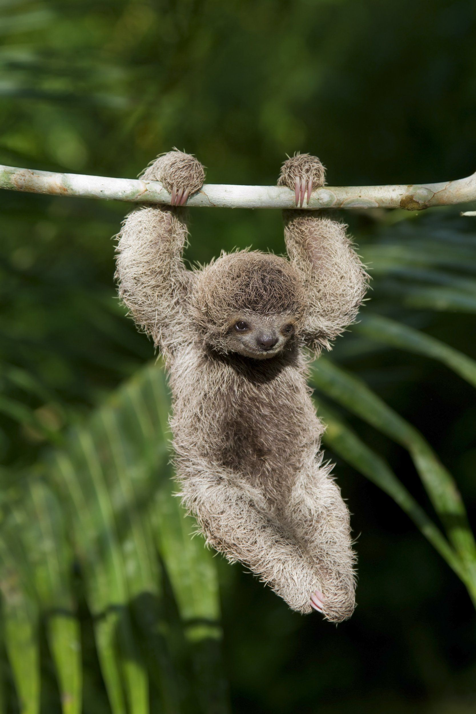sloth wallpapers 70 background pictures