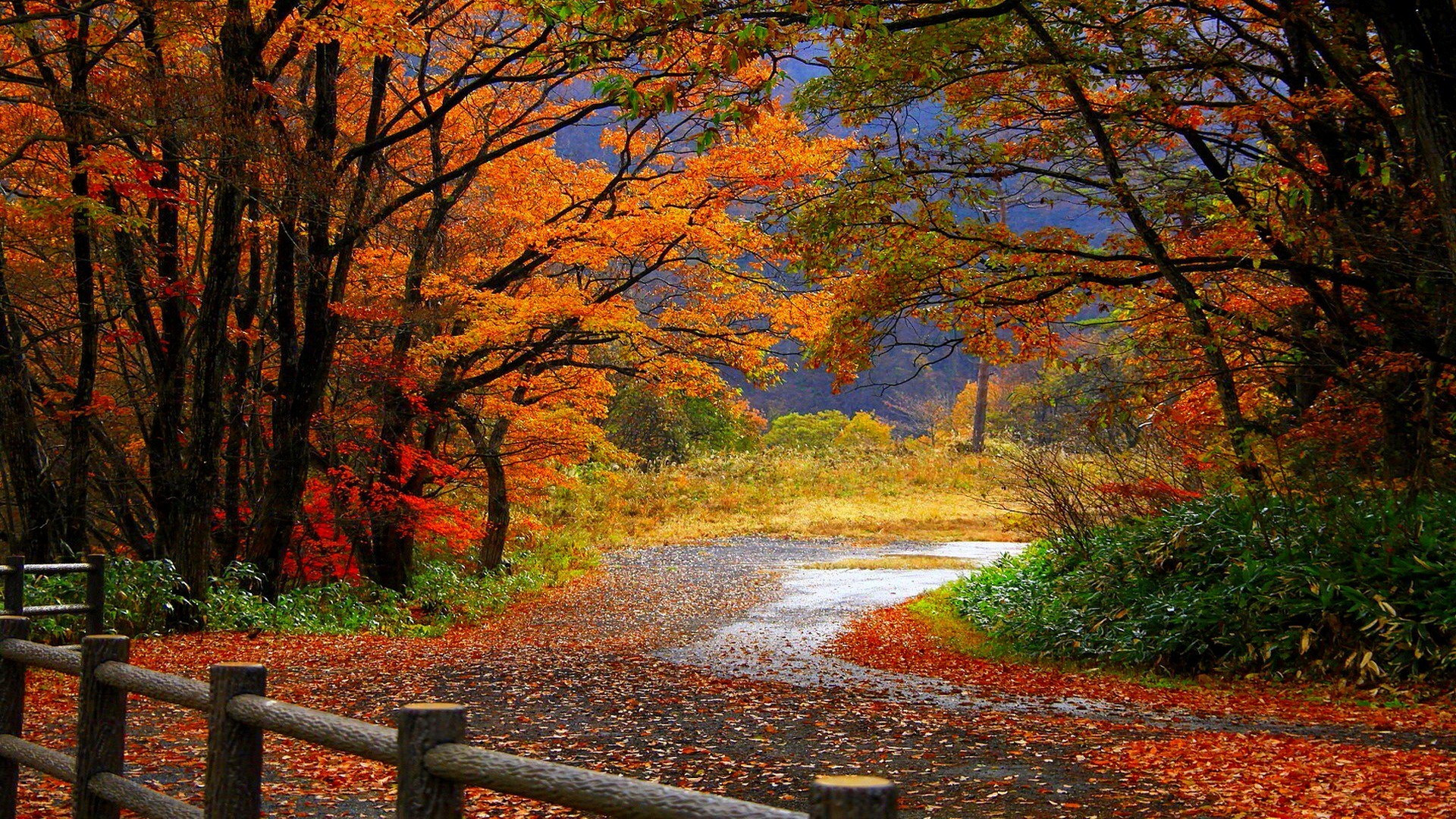 Fall Themed Wallpapers Desktop 61 Background Pictures
