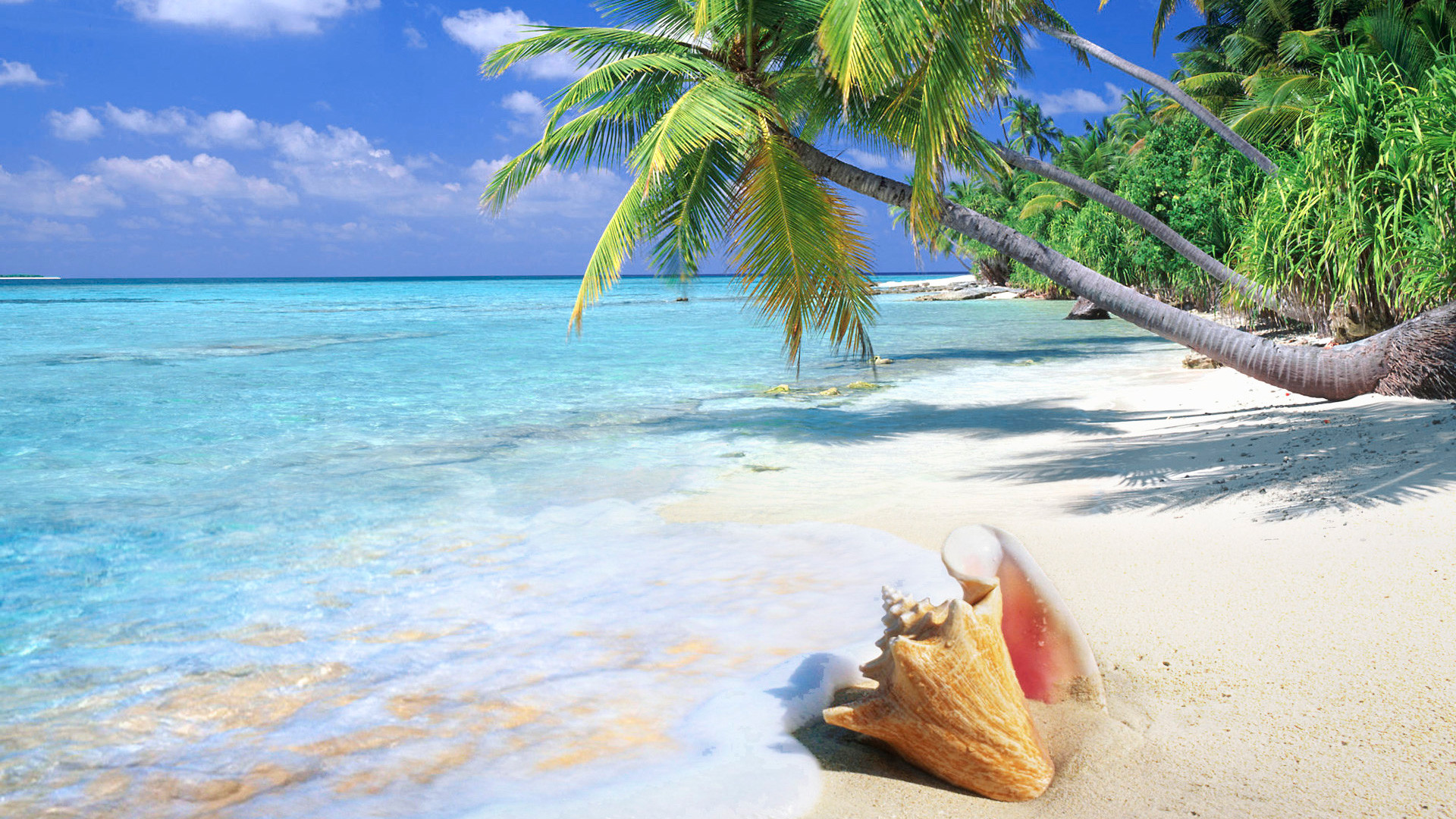 Beach Paradise Wallpapers 57 Background Pictures