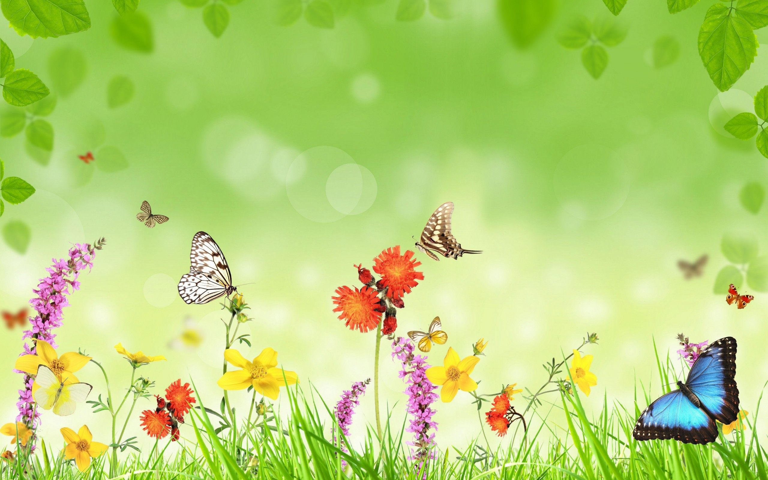 Butterfly Wallpapers Desktop 64 Background Pictures