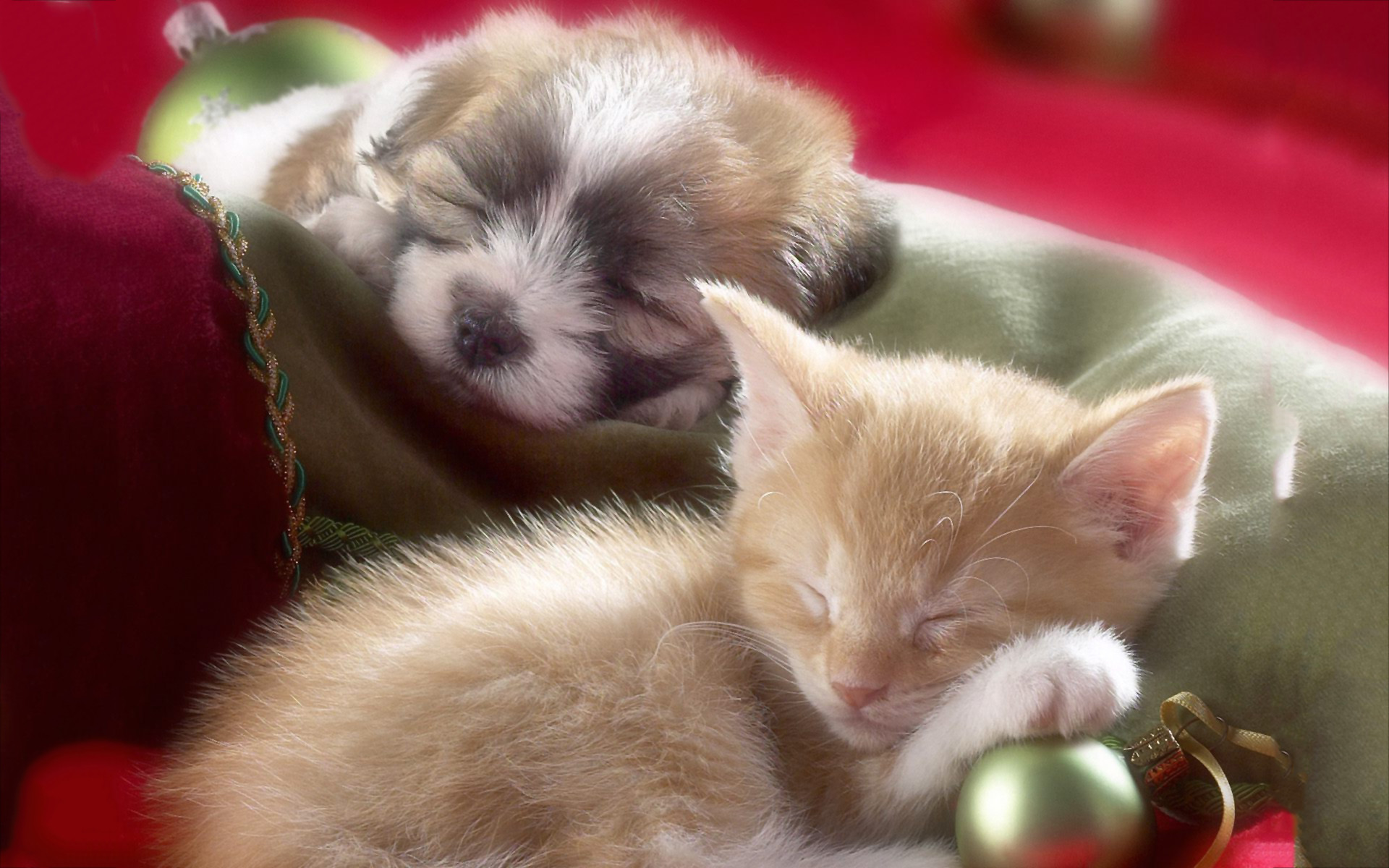 1974x1134 Astonishing Puppies And Kittens Wallpaper Pets Image Of Cute Puppy Kissing Pics Trends Styles