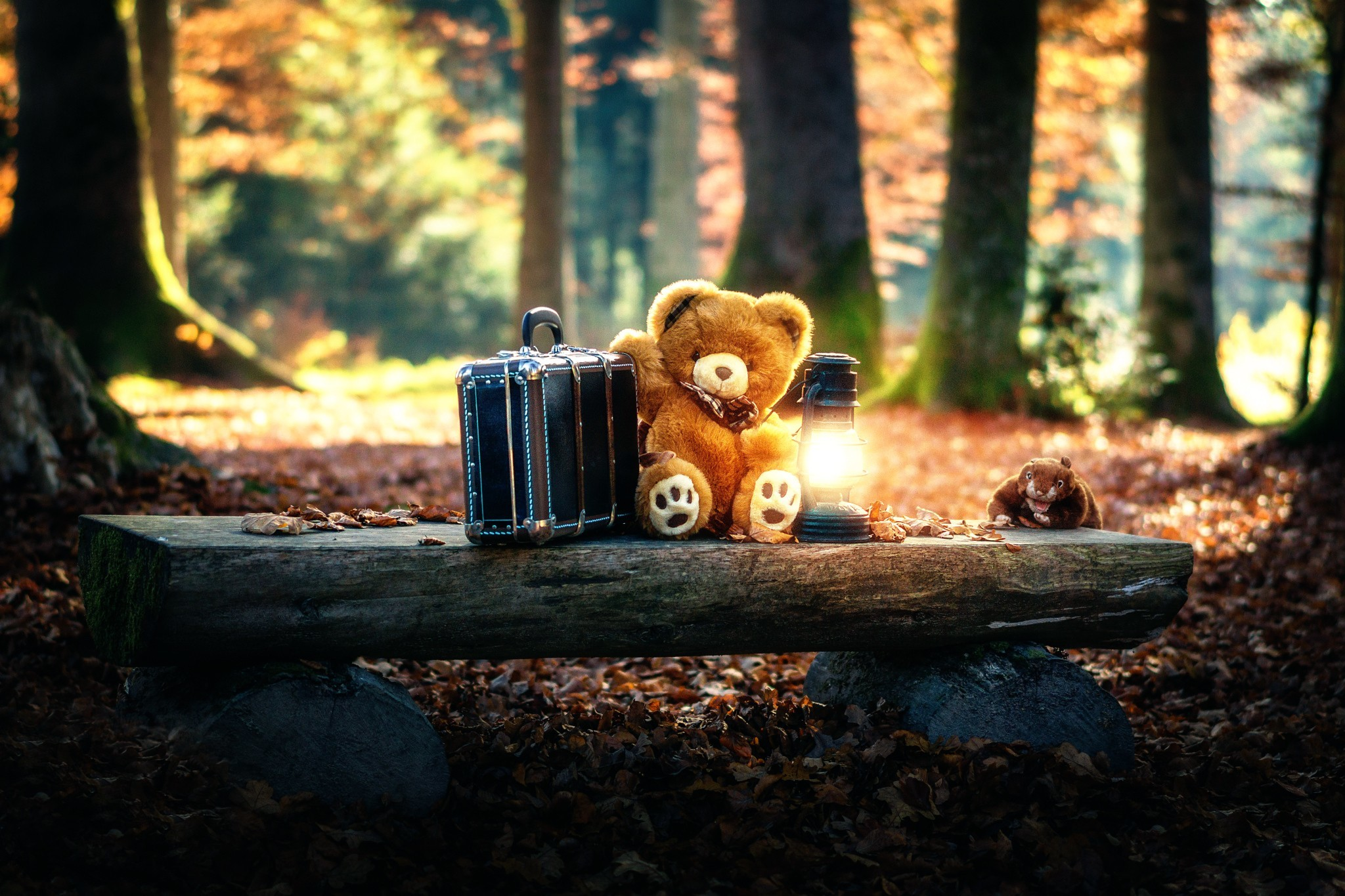 Teddy Bear Wallpapers 60 Background Pictures
