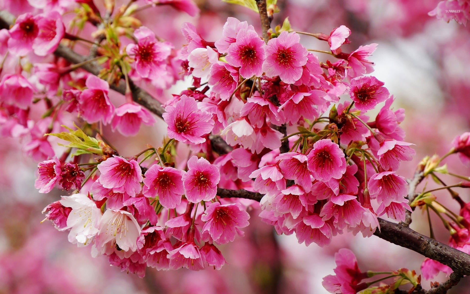 Spring Flowers Wallpapers (82+ background pictures)