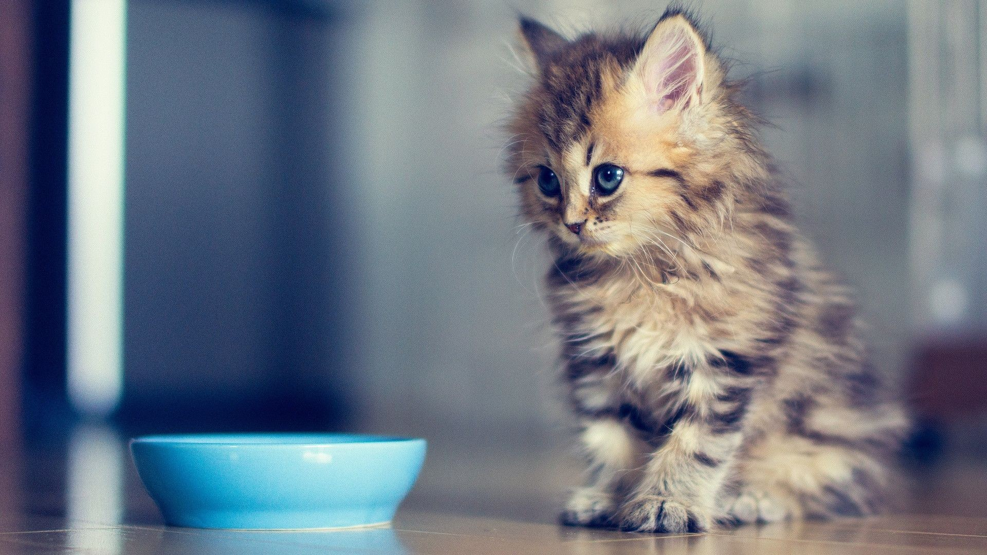 Cute kitten wallpapers 75 background pictures 1920x1200 kitten wallpaper elegant cute kitten desktop backgrounds impremedia thecheapjerseys Images