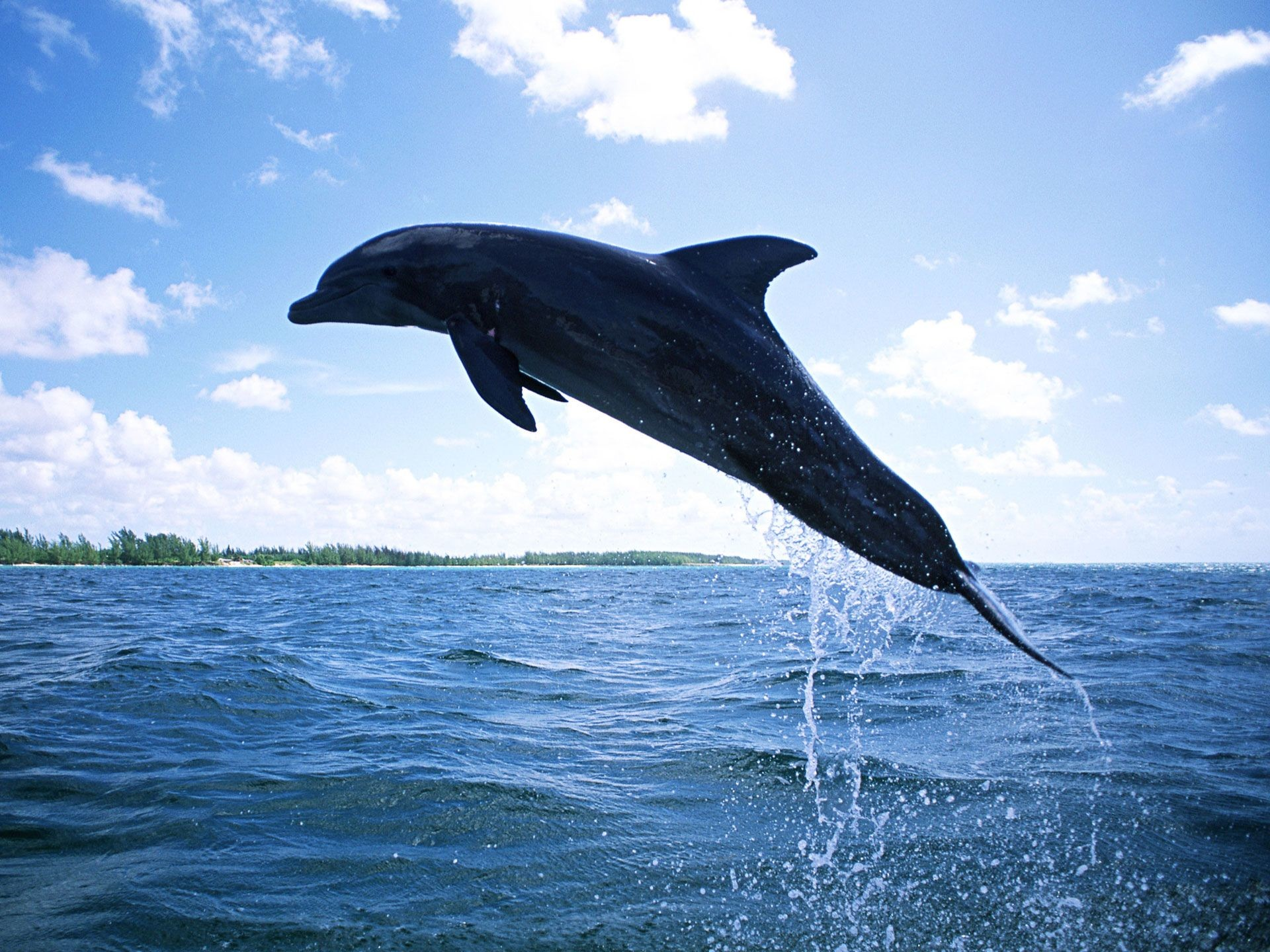Dolphin Wallpapers For Desktop 64 Background Pictures