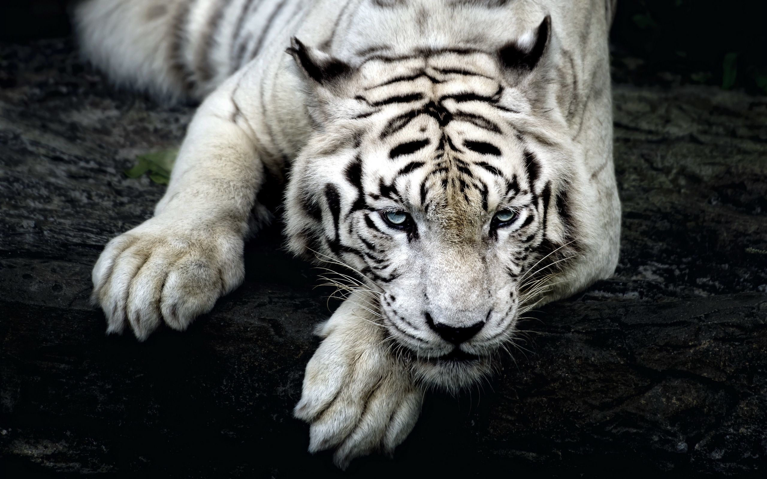 Cool Animals Wallpapers 67 Background Pictures