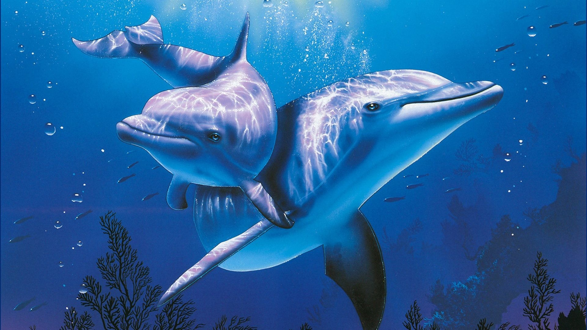 sea animals wallpapers (61+ background pictures)