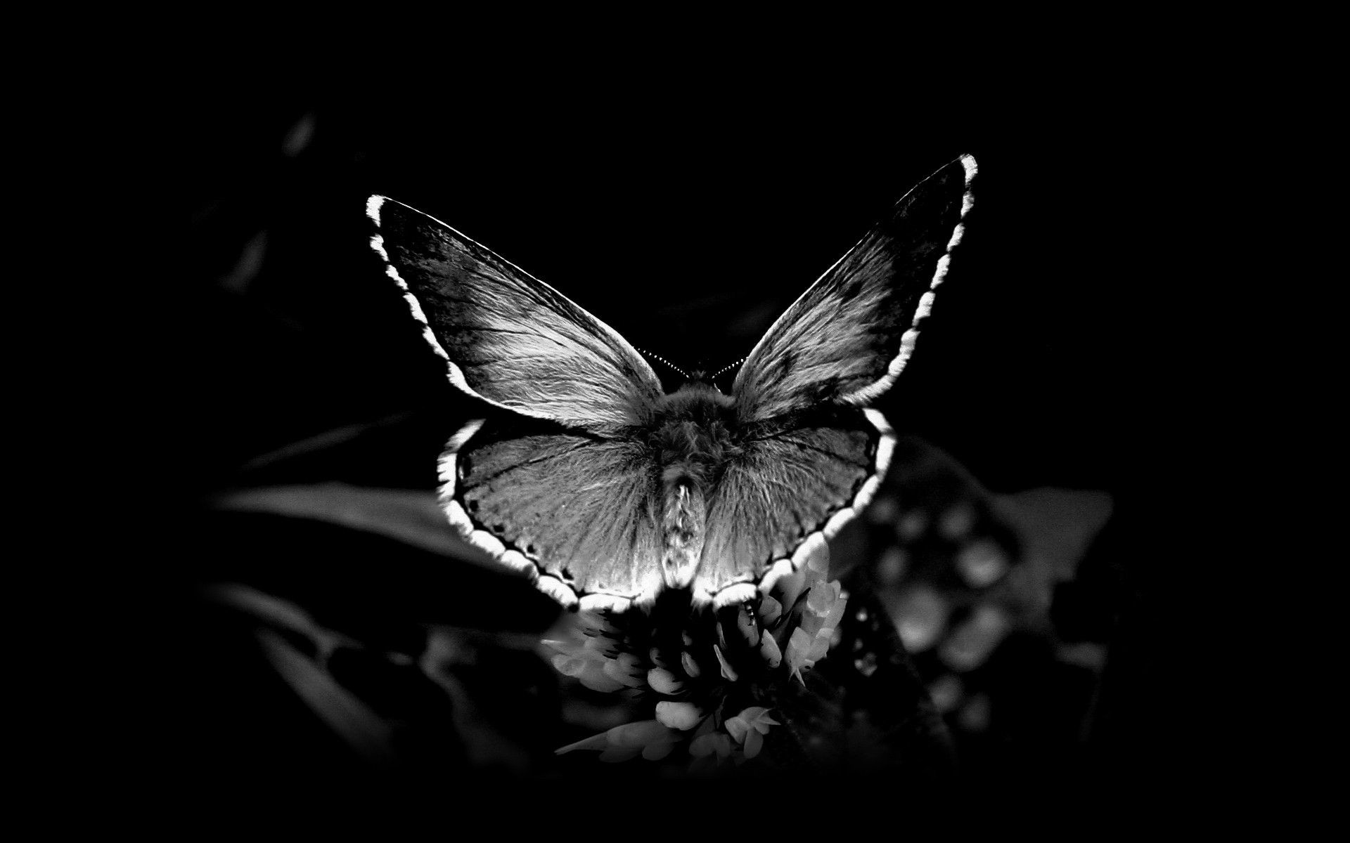 Cool Black And White Wallpapers 66 Background Pictures