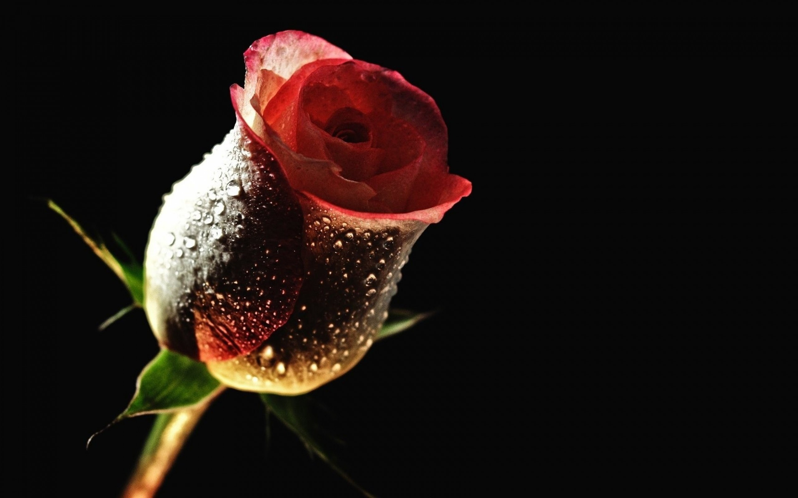 red roses wallpapers for desktop (63+ background pictures)