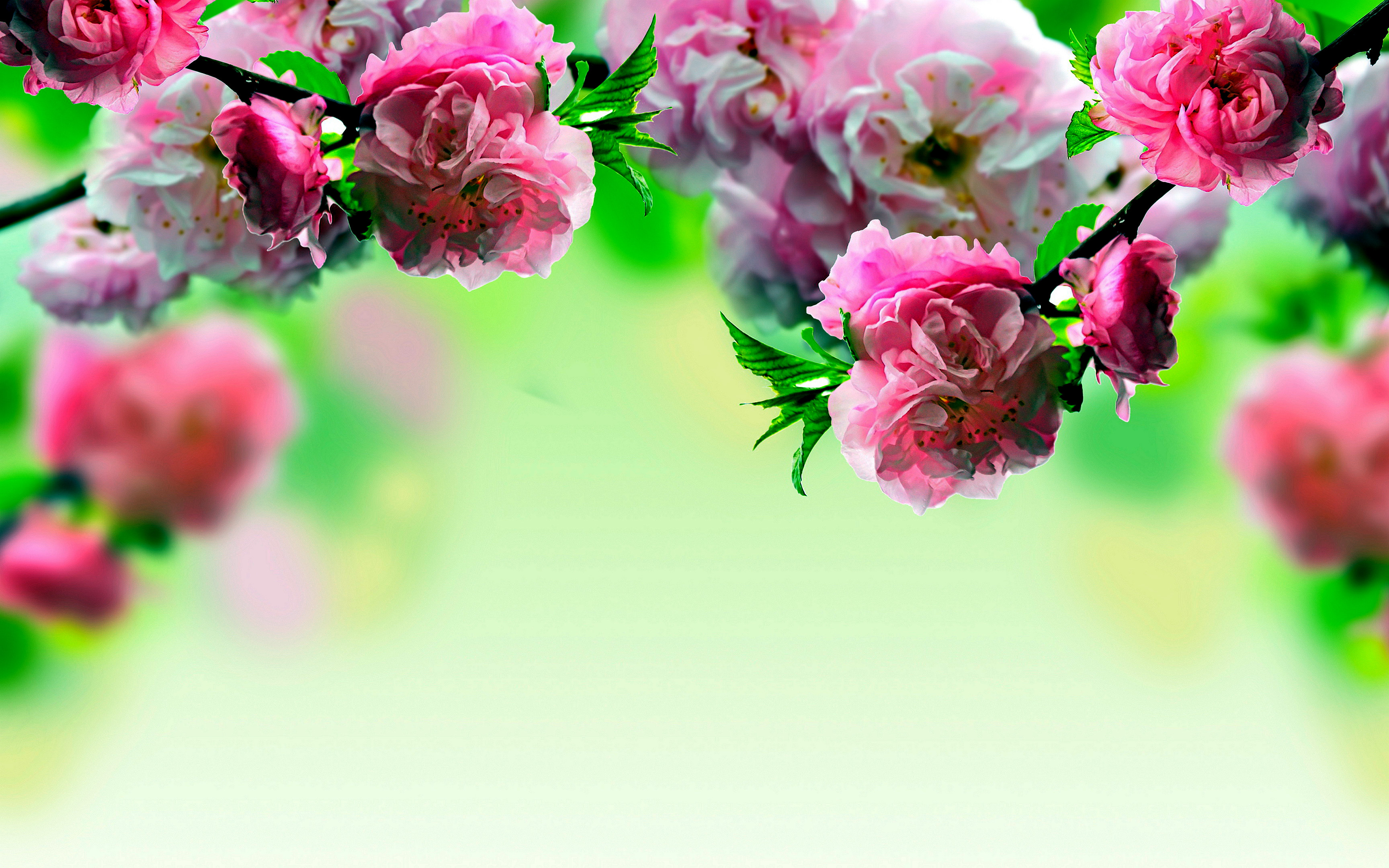Hd Spring Wallpapers For Desktop 83 Background Pictures