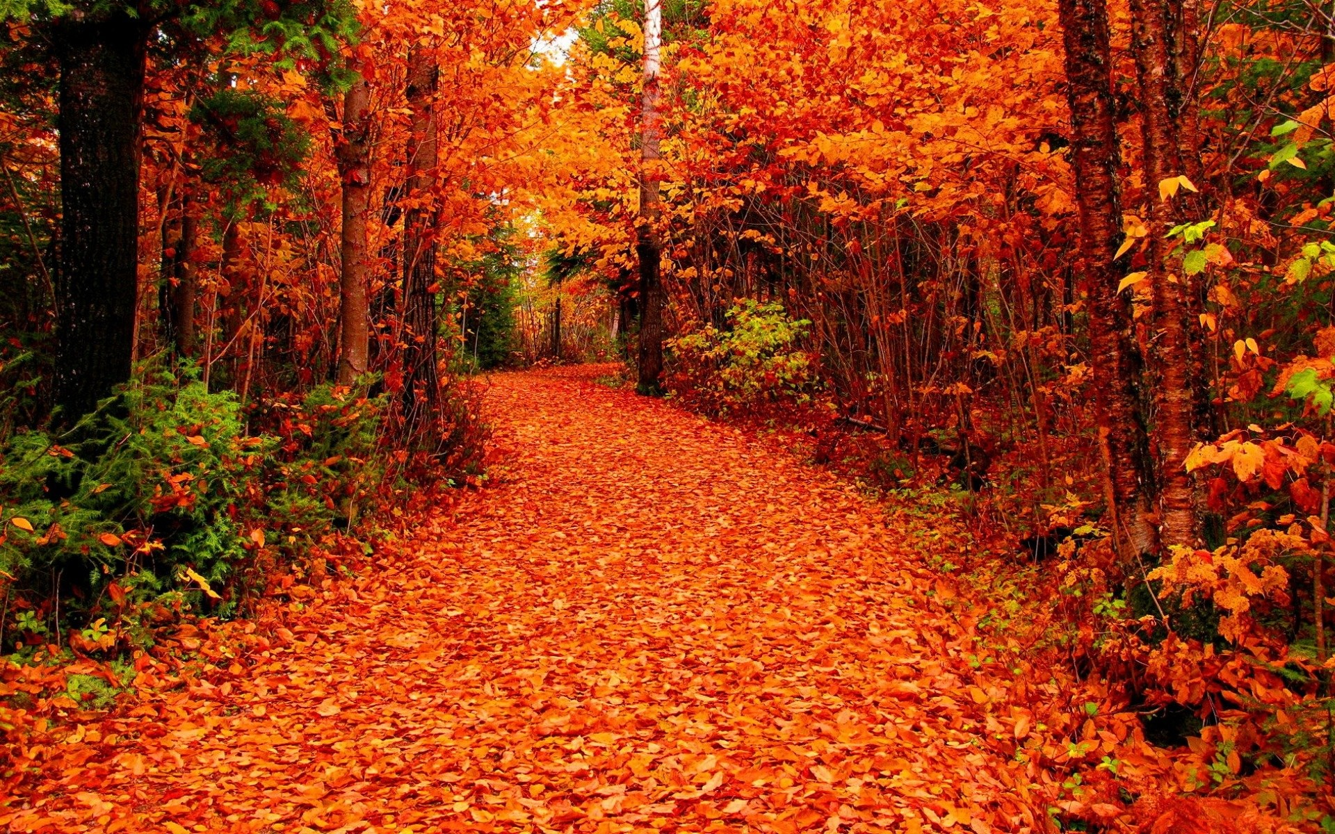 fall foliage wallpapers for desktop (66+ background pictures)