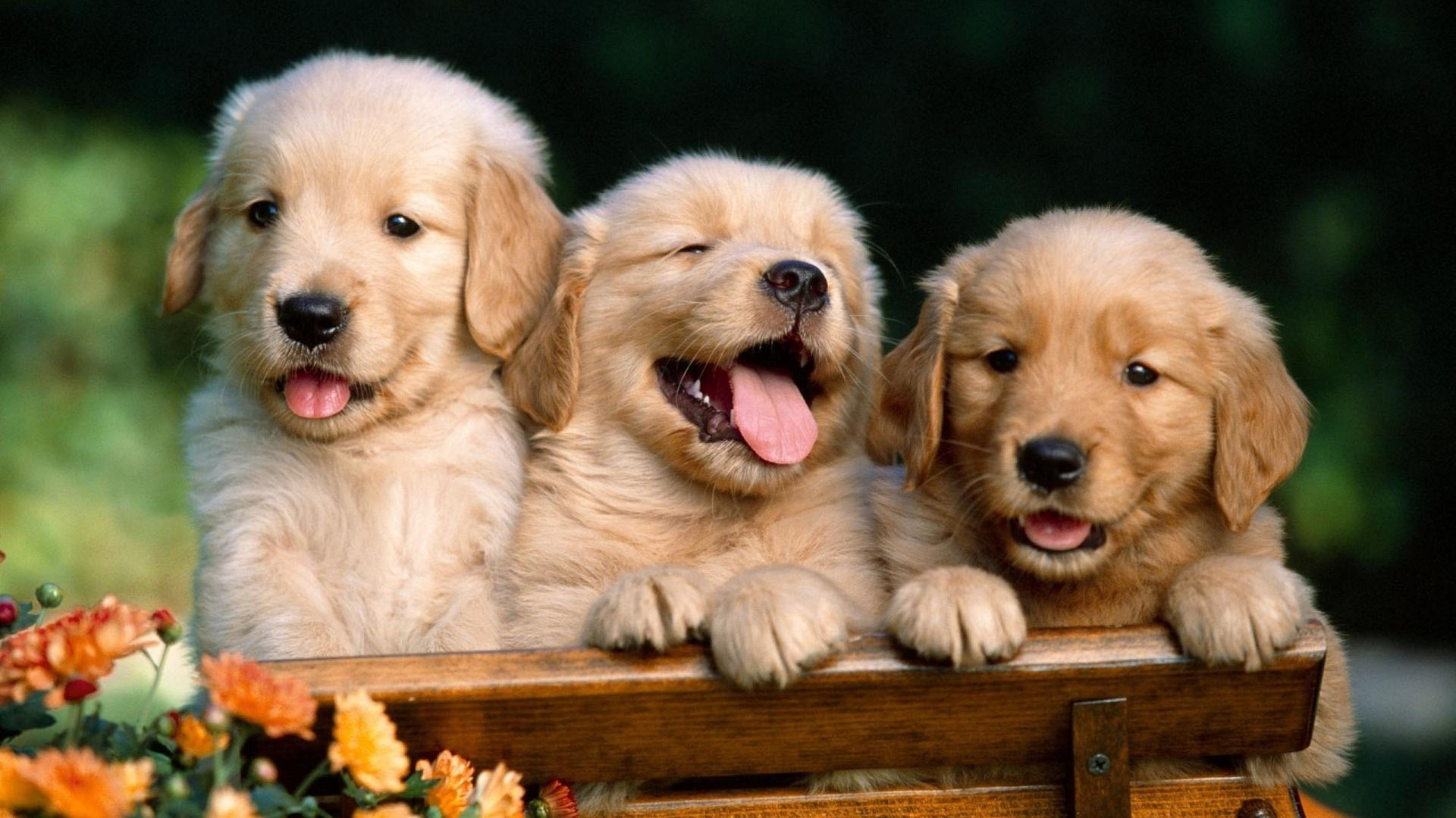 Puppies and kittens wallpapers 62 background pictures 1920x1080 kitten and puppy wallpapers mobile thecheapjerseys Choice Image