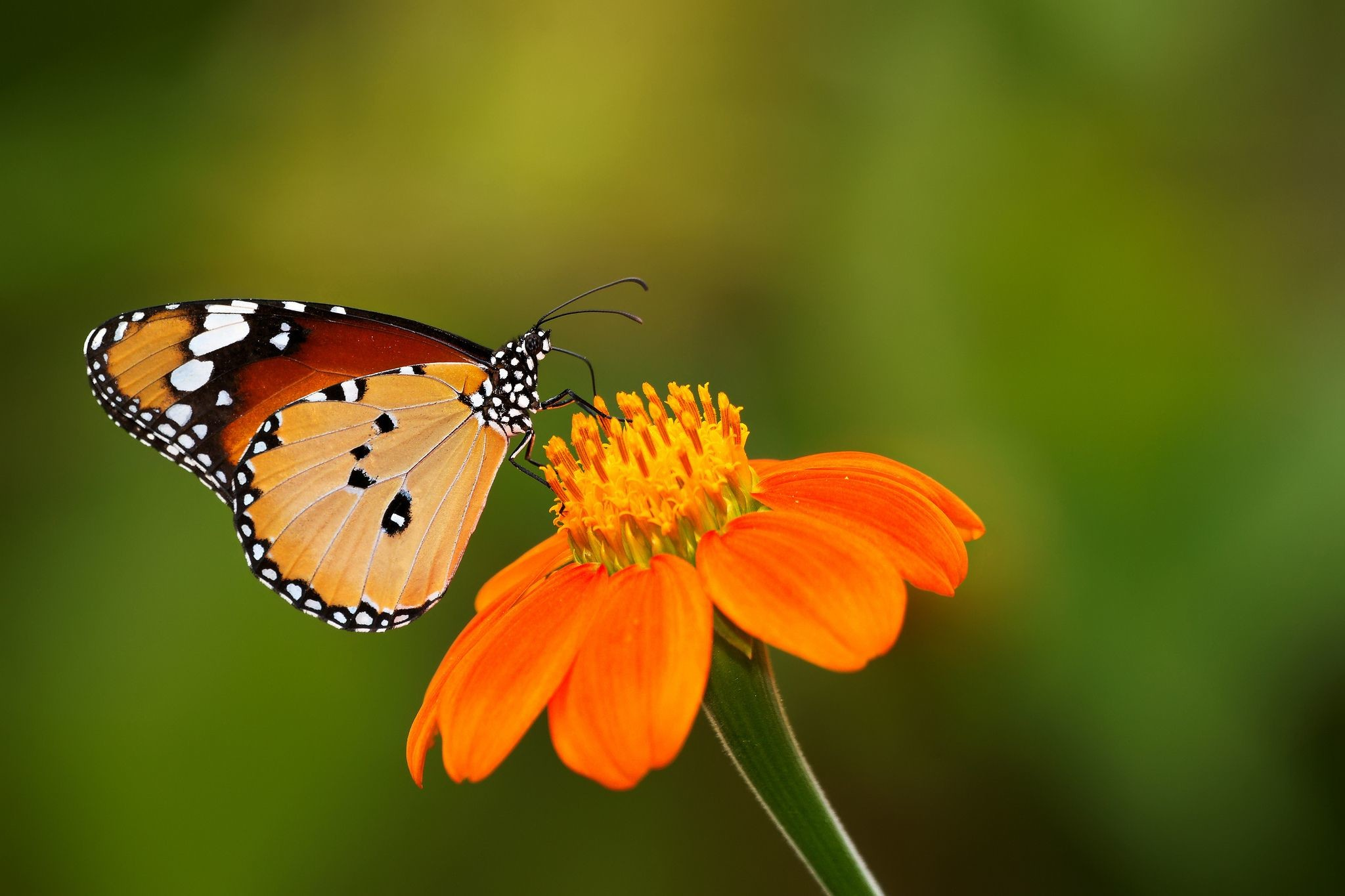 Beautiful Butterfly Wallpapers 59 Background Pictures