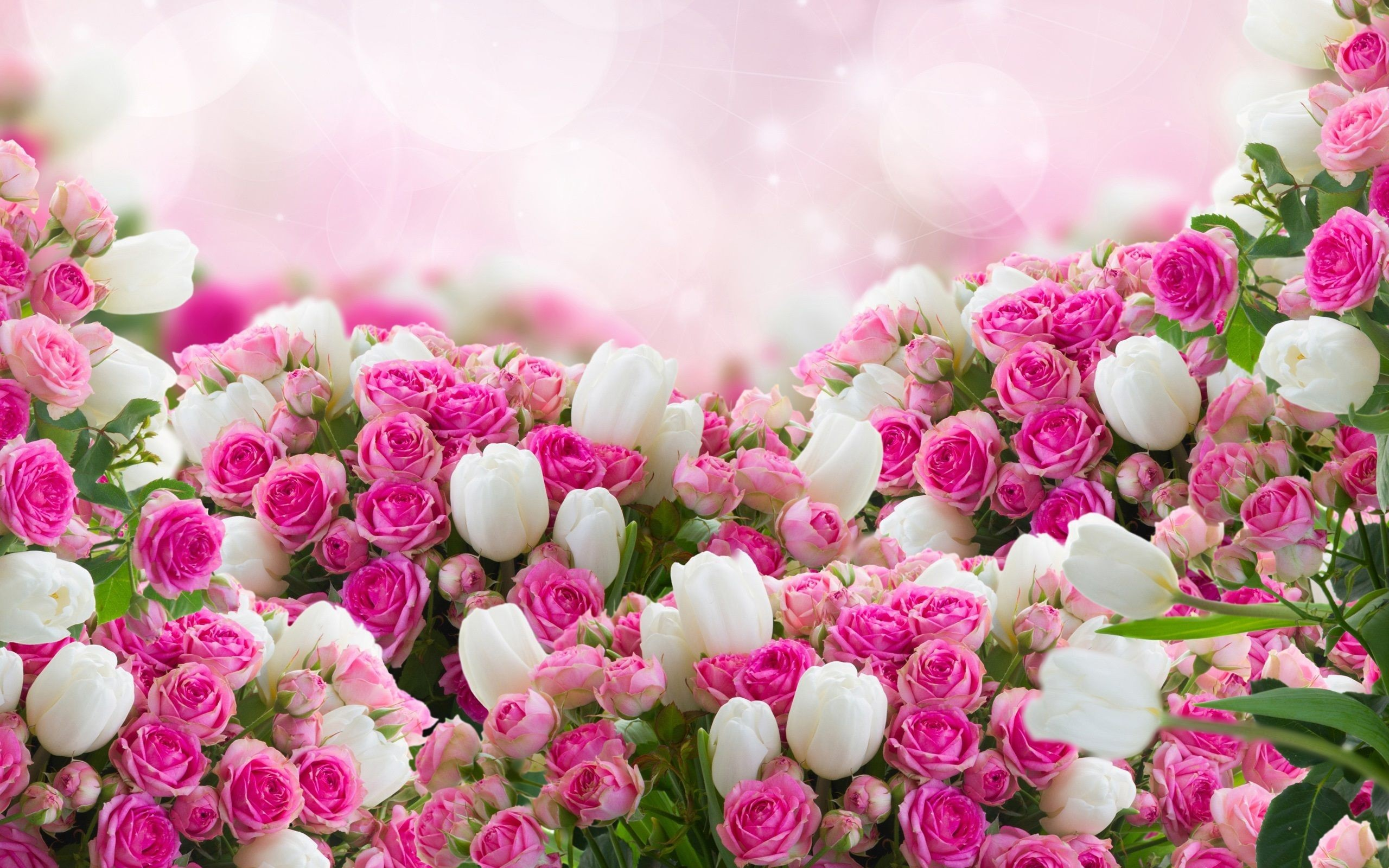 75 pictures of most beautiful flowers in 4k wiki wallpapers 2018 1920x1200 best beautiful flowers wallpapers in hd wallpaper top most pretty for smartpne flowers wallpapers 75 izmirmasajfo