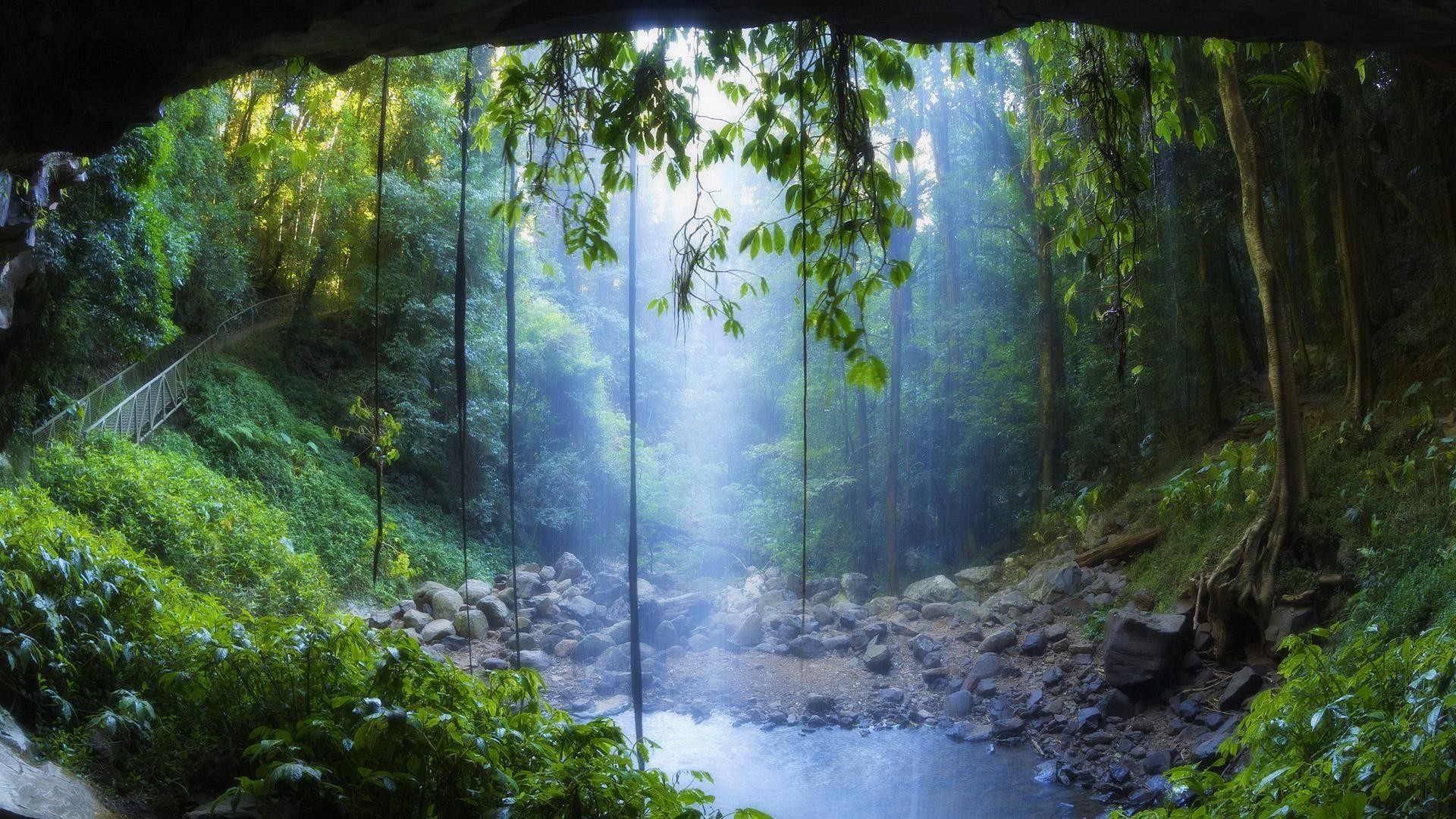 2560x1600 Wallpaper For Tropical Rainforest Rain Forest Hd Pics Iphone