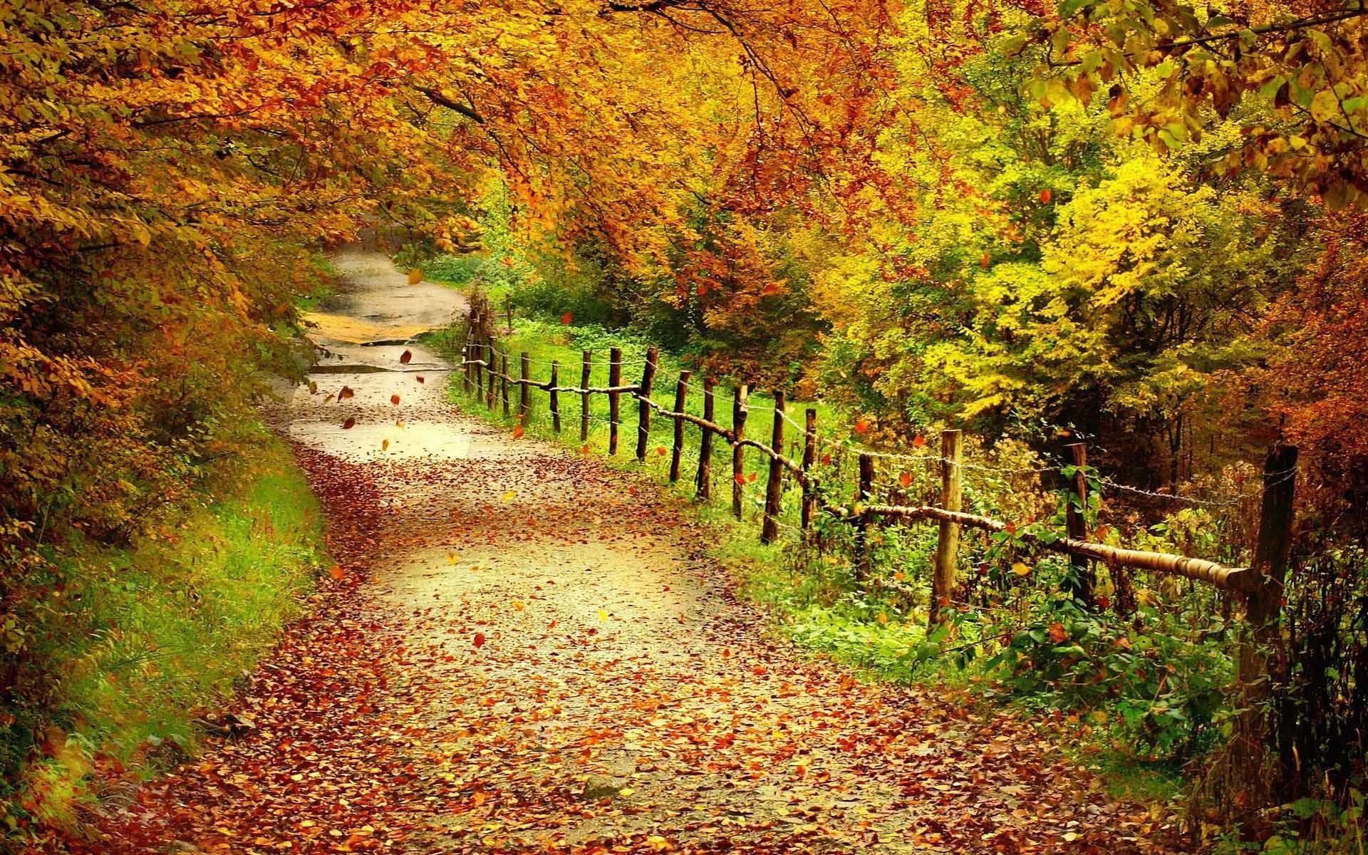 1920x1080 Autumn Fall Leaves Wallpapers HD Desktop Wallpaper, Background Image