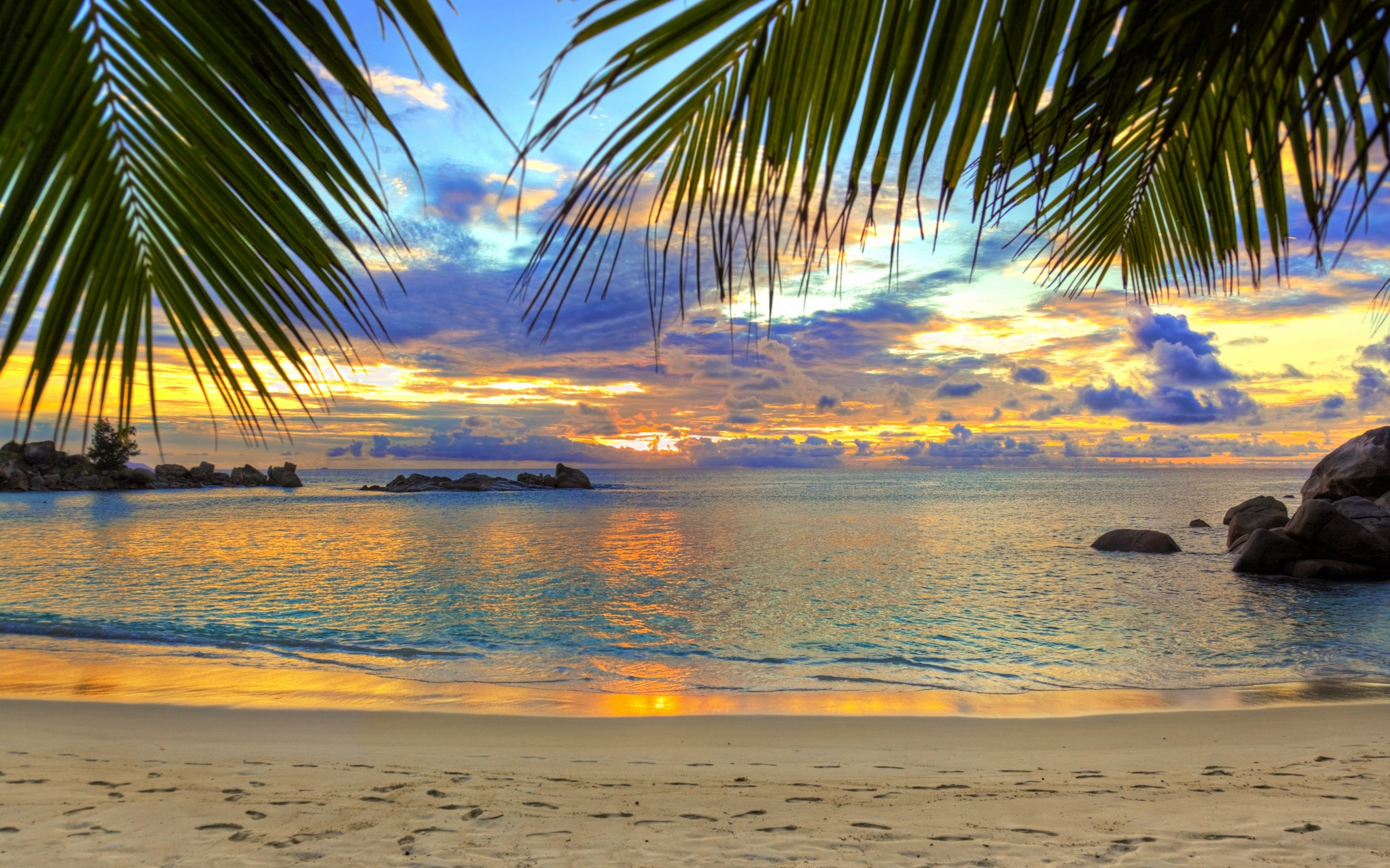 Palm Tree Desktop Wallpapers (73+ Background Pictures
