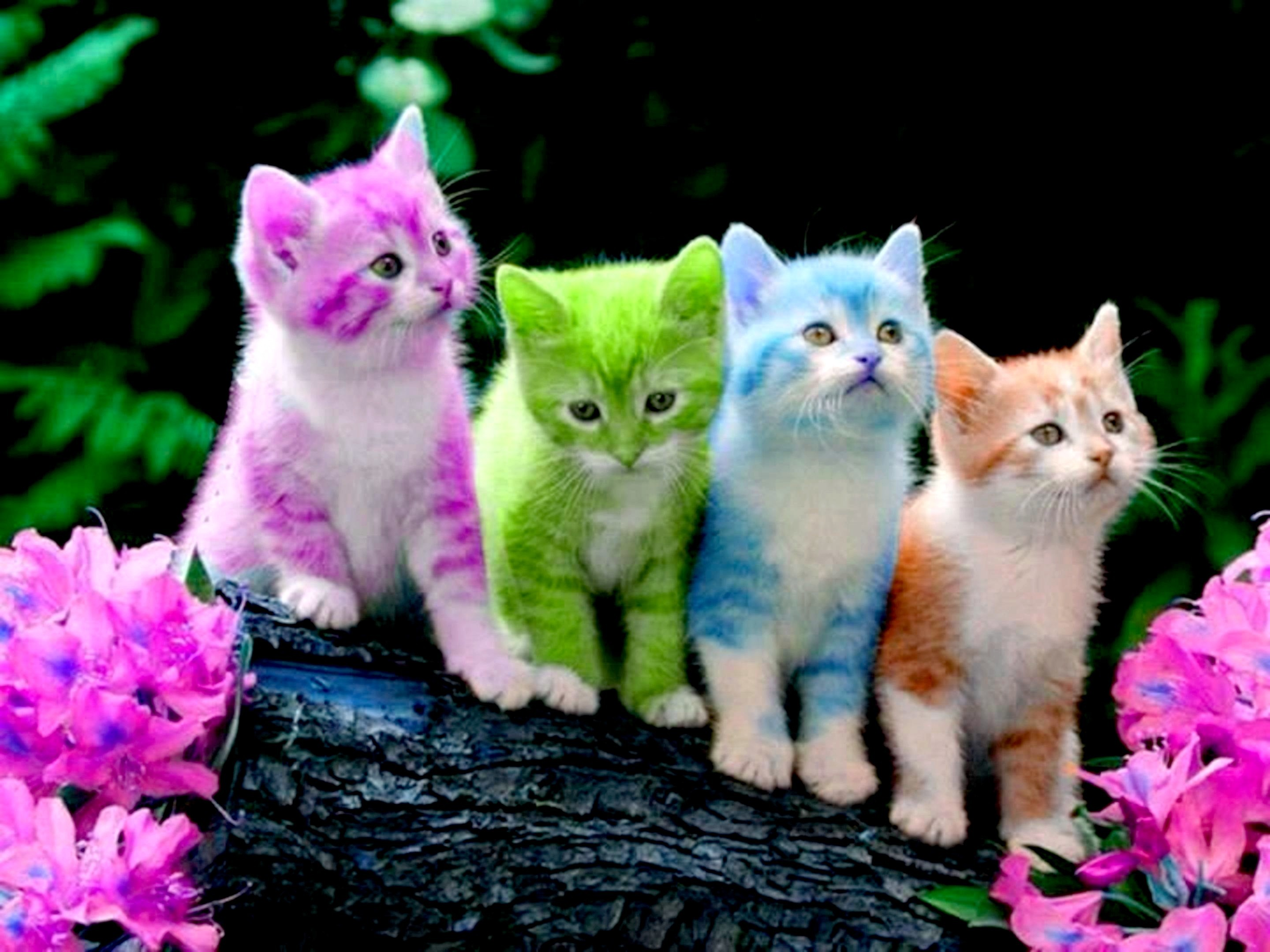 Funny kittens wallpapers 68 background pictures 2560x1440 animals cute kittens wallpaper thecheapjerseys Images