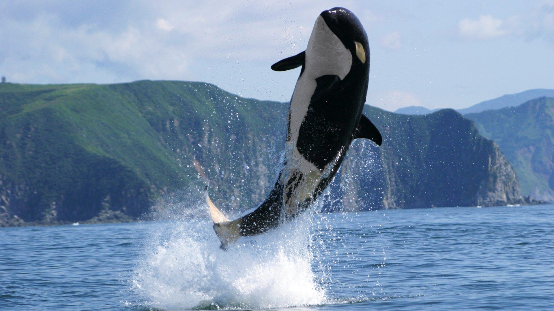 1920x1080 Killer Whales Wallpapers High Quality Download Free 1600A 1069 Pictures Of