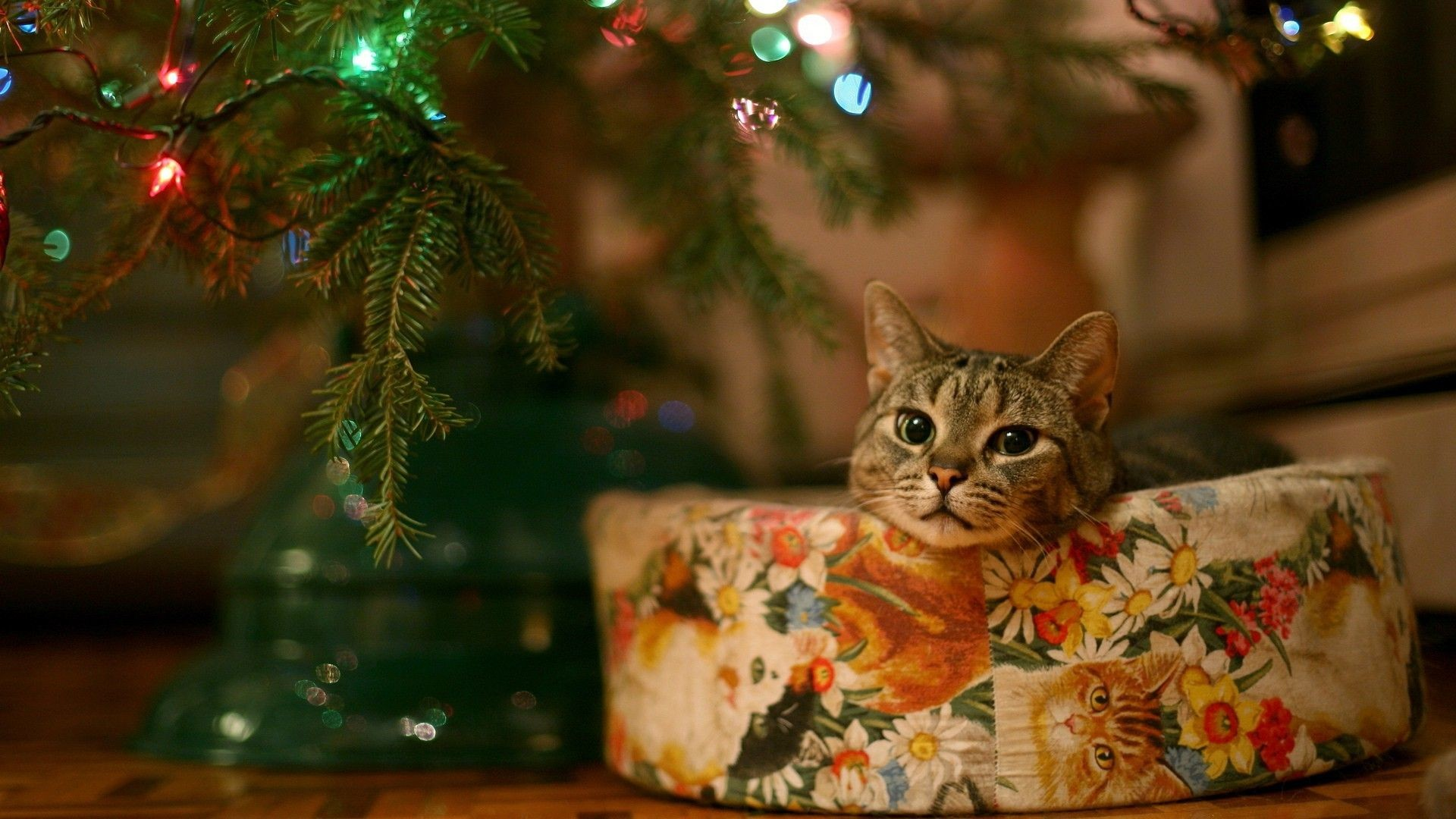 Christmas Cat Wallpapers 66 Background Pictures
